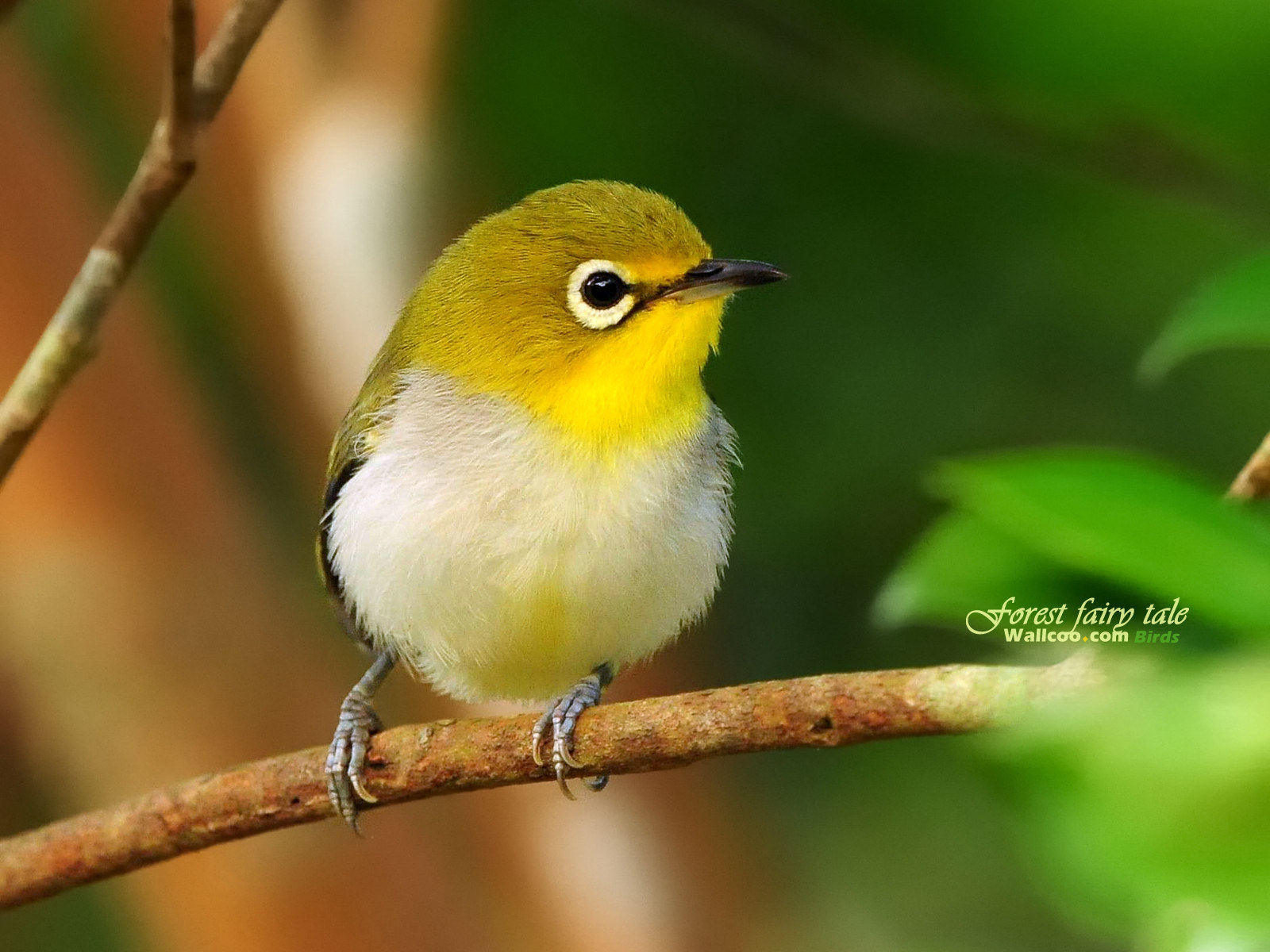 Cute bird wallpaper 19393