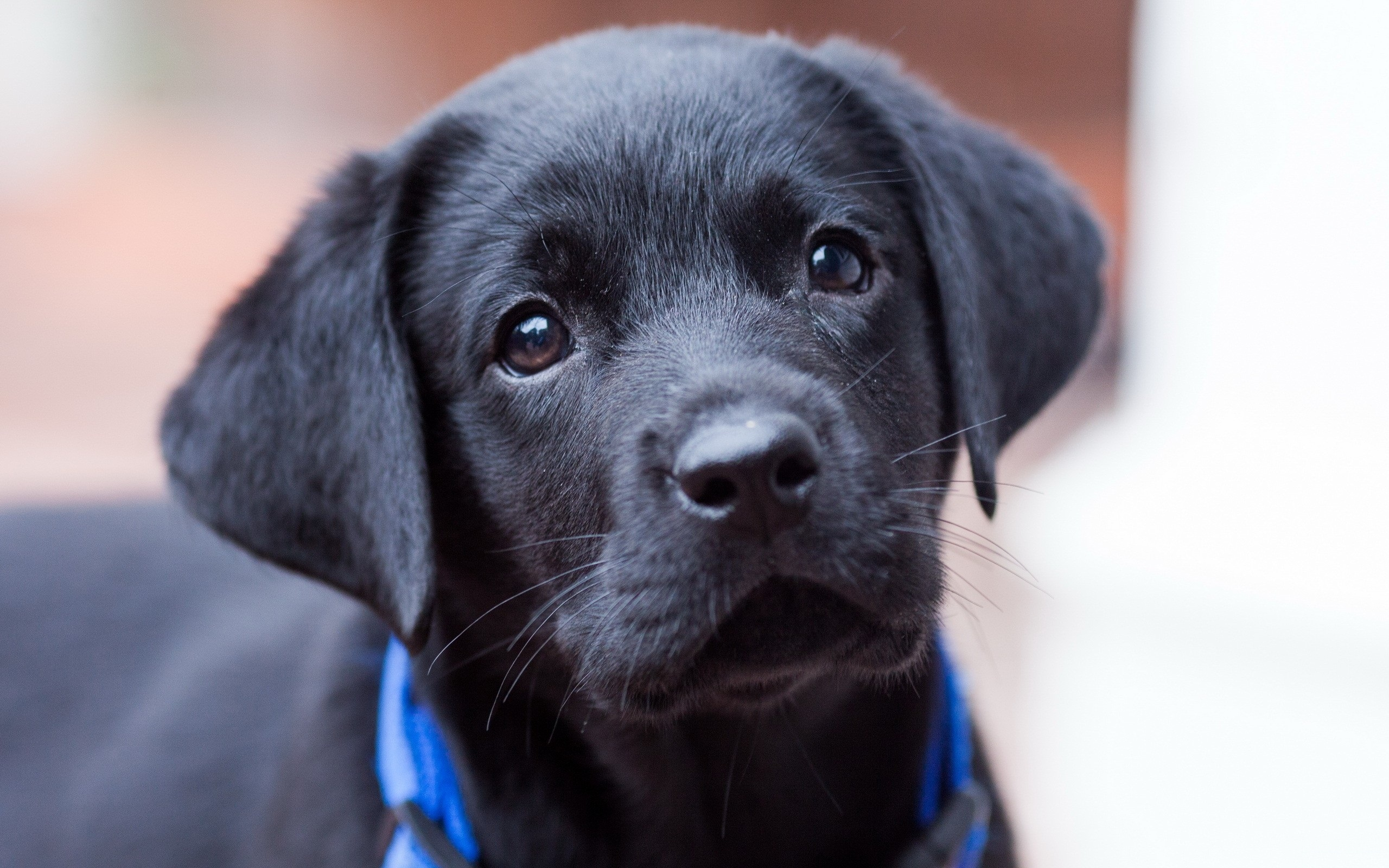 Cute Black Puppy