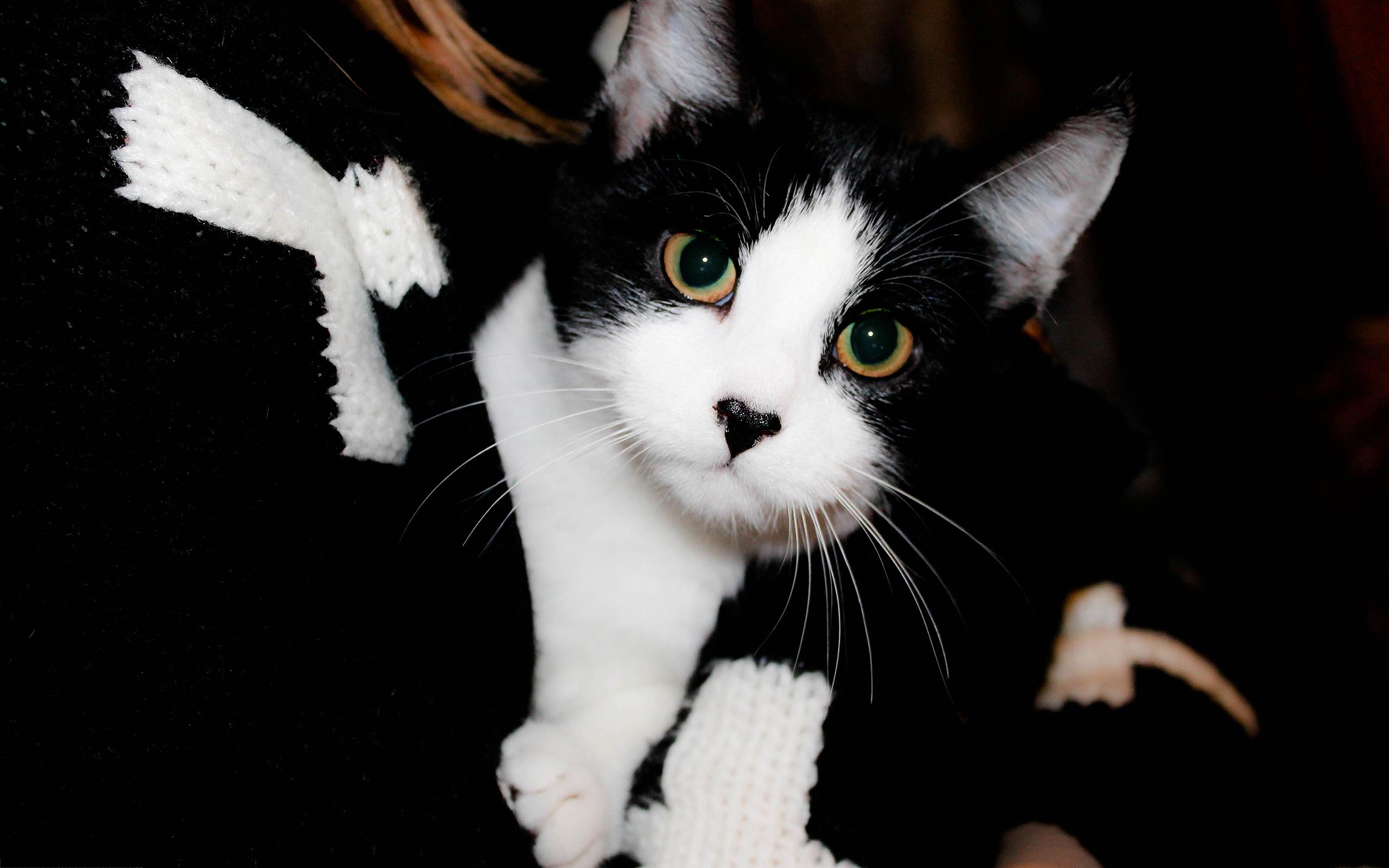 Cute black white cat