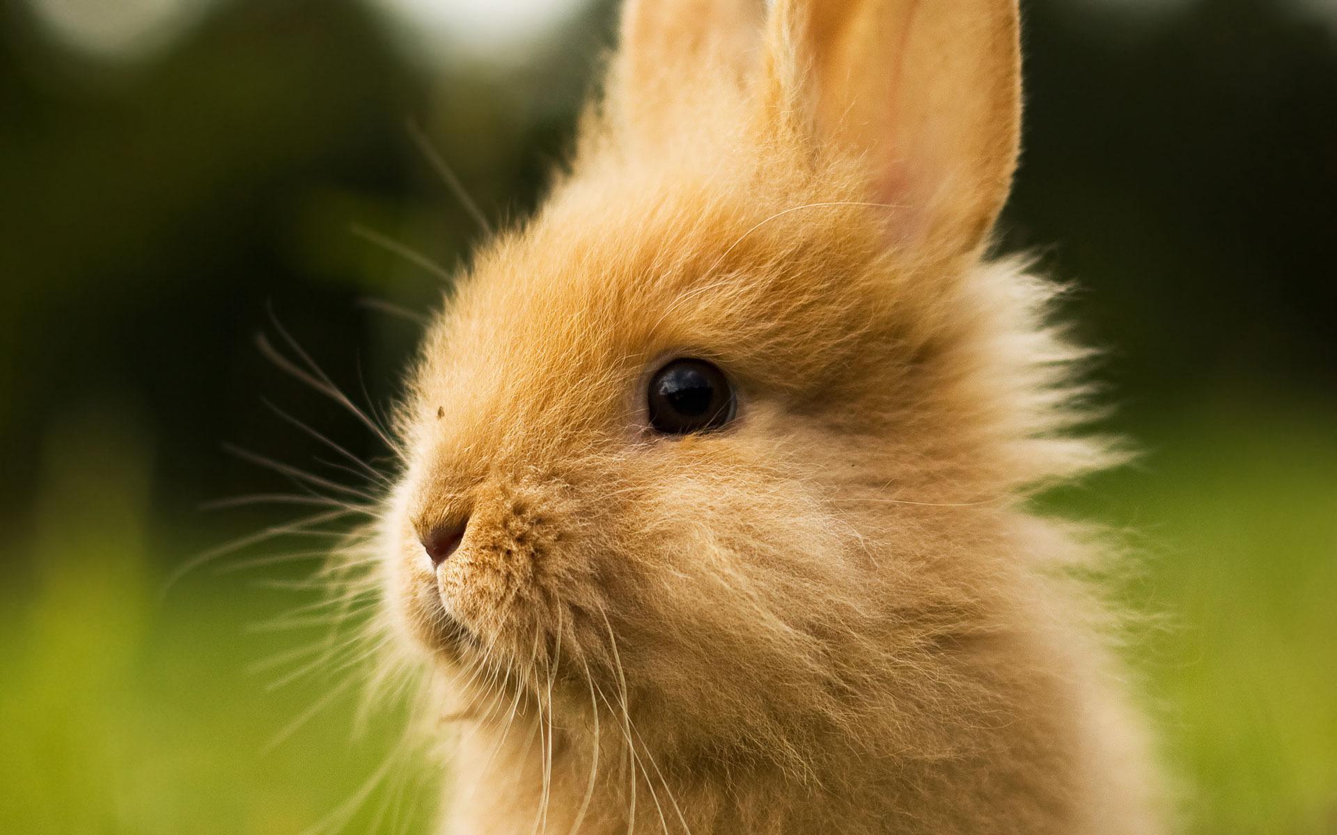 Cute bunny head