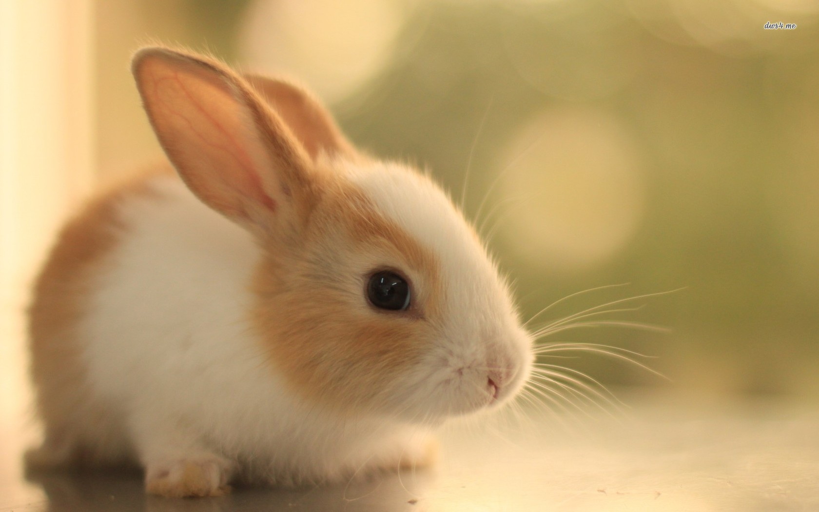 Cute Bunny Pictures Wallpaper