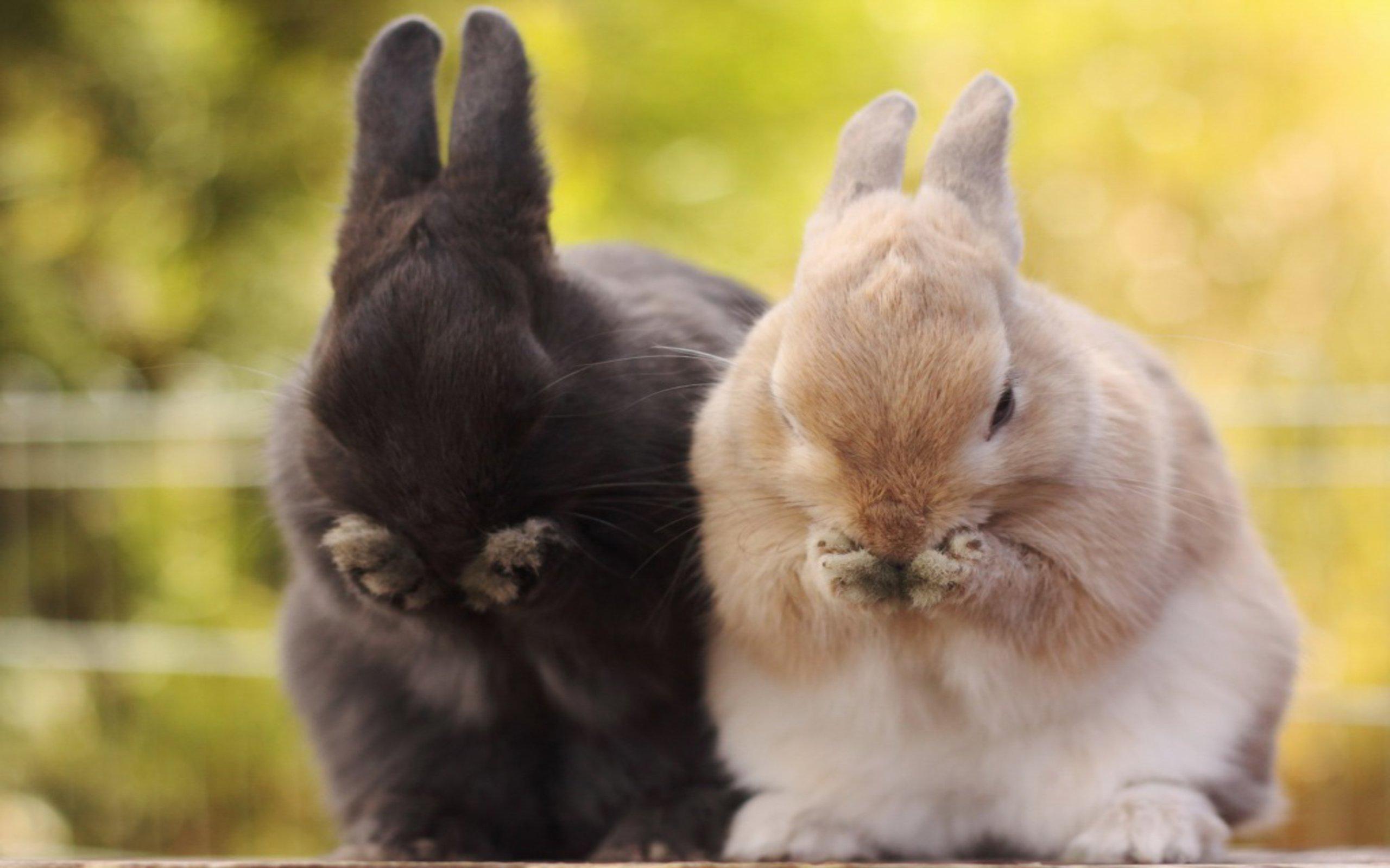 Cute Bunny (12)