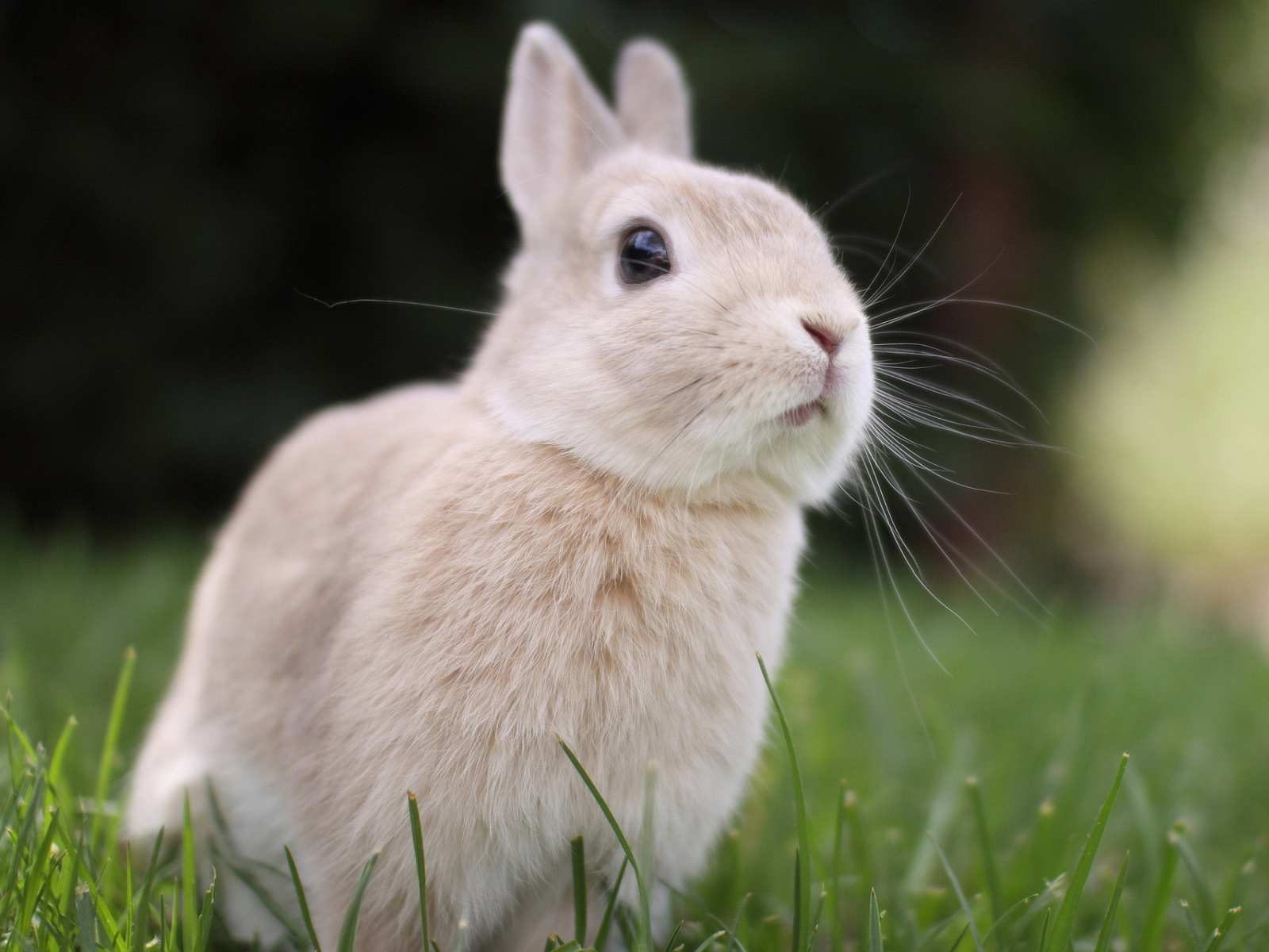 Cute Bunny Pictures