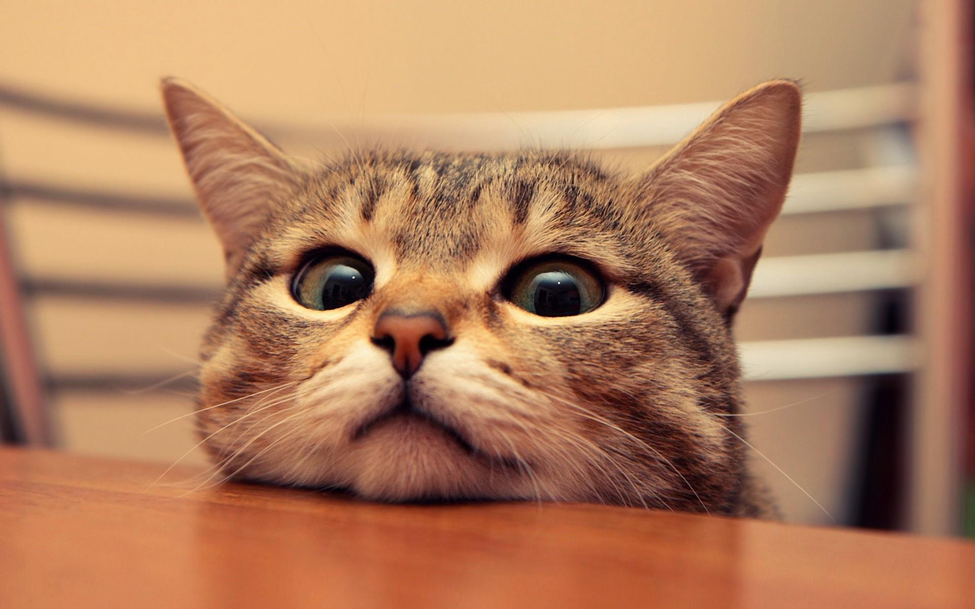 funny-cat-photo. 59717a9a9f8a3d2531d84e240b823c95