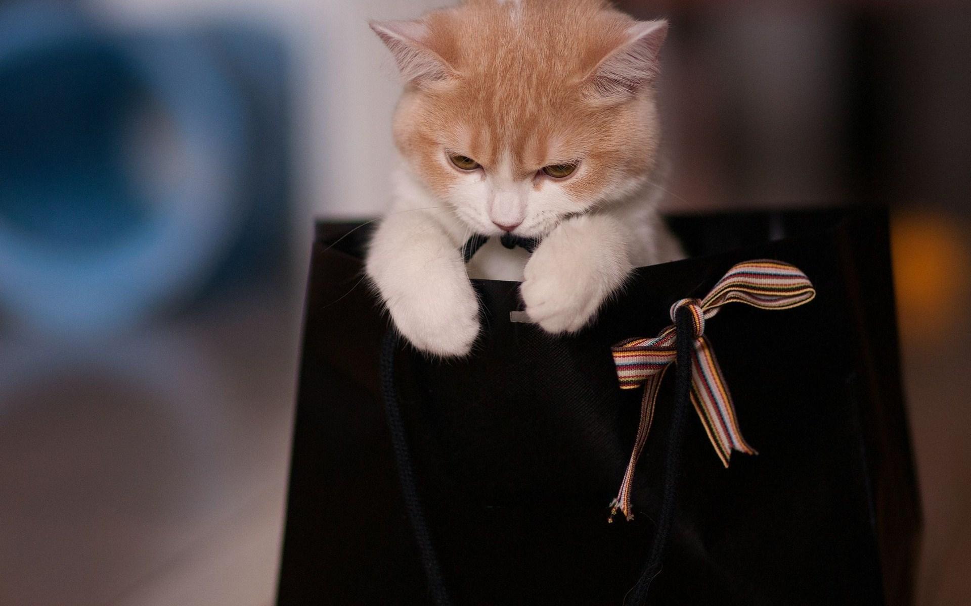 Cute Cat Gift Photo