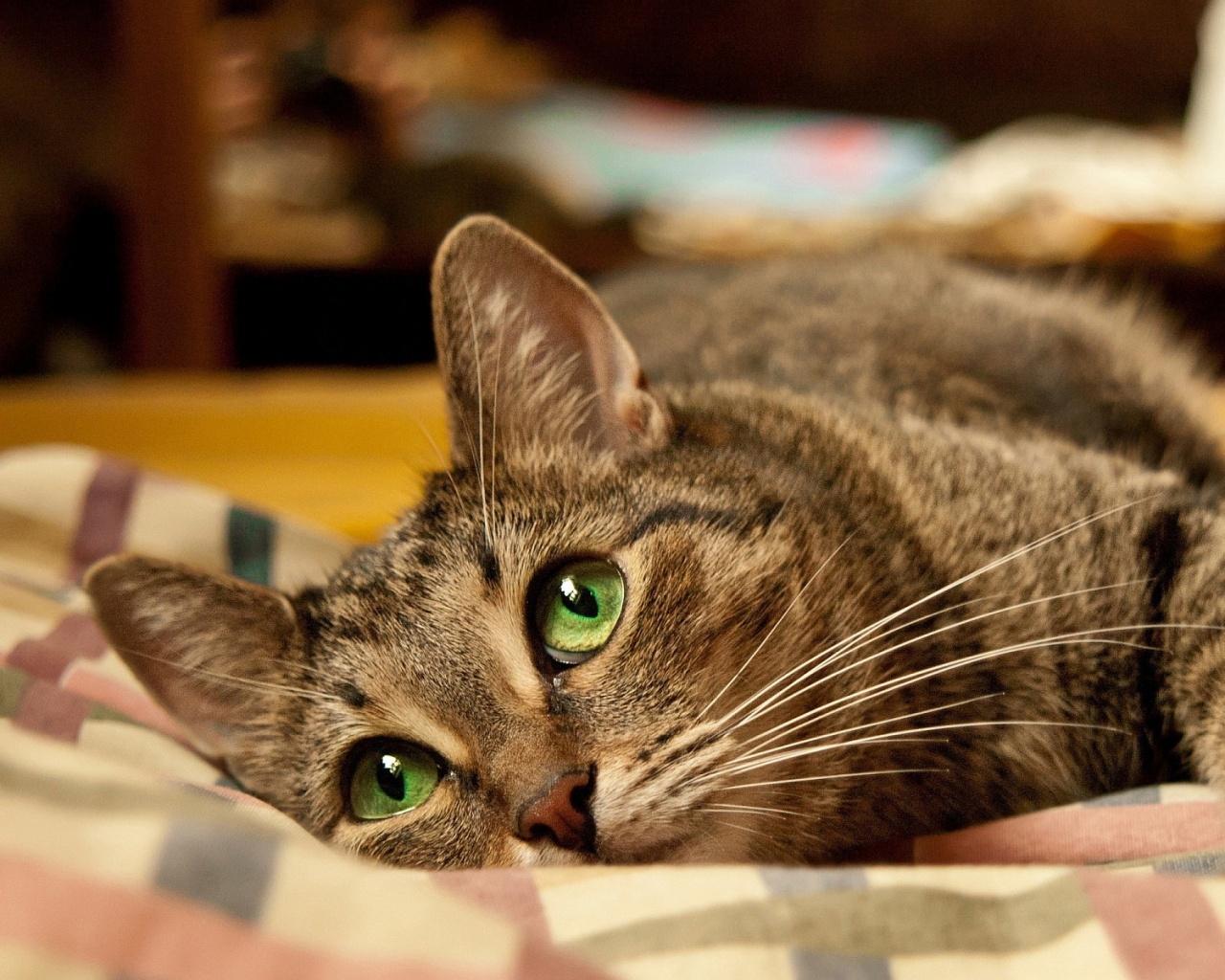 Cute cat green eyes