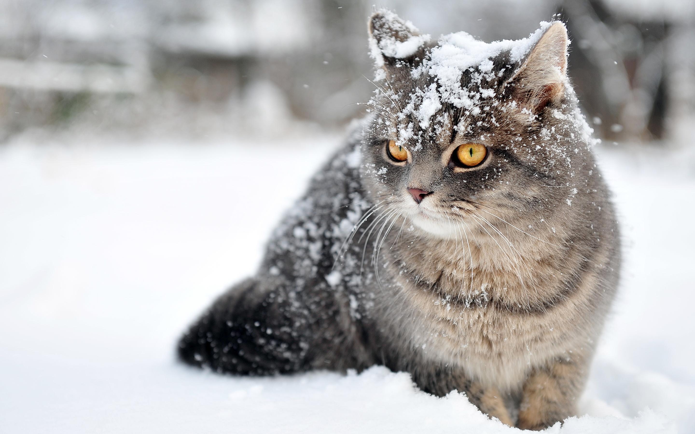 Cute cat in snow