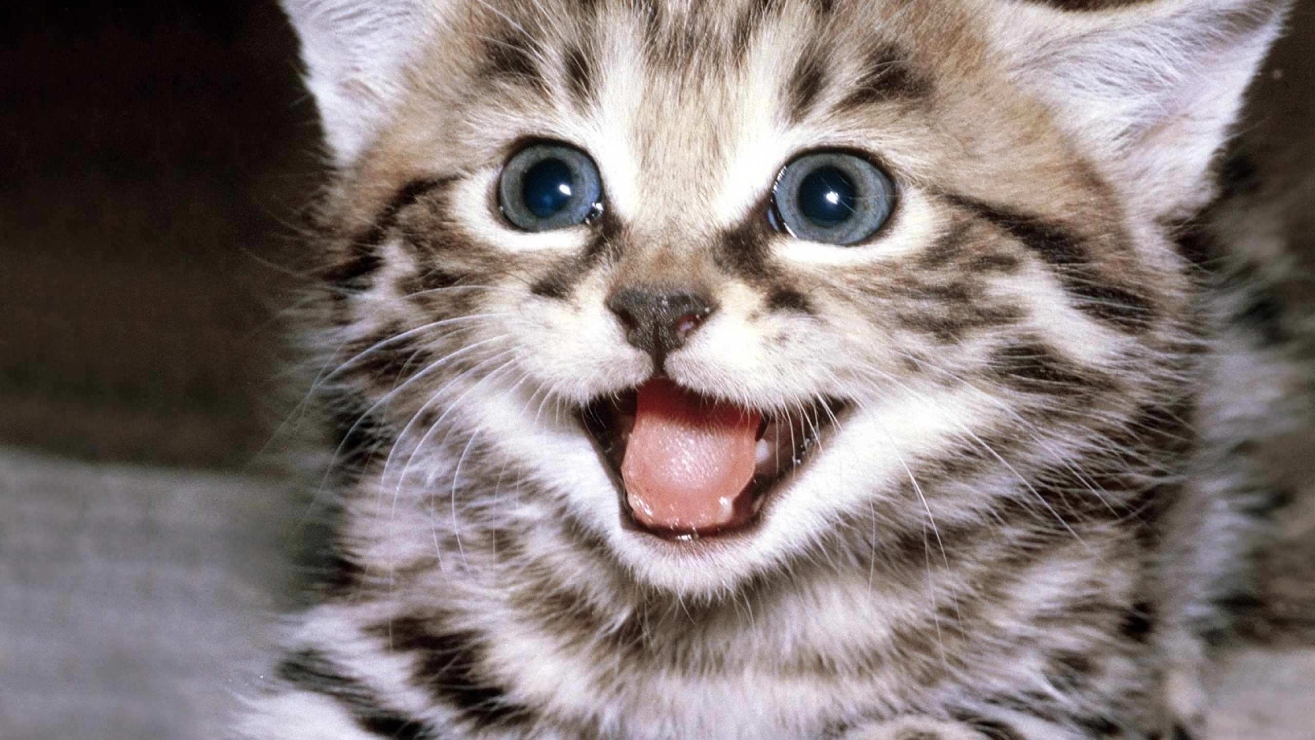 Cute Cats 559 Images HD