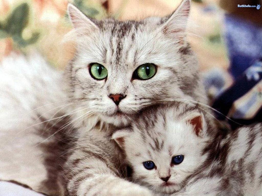Cats so freakin cute!