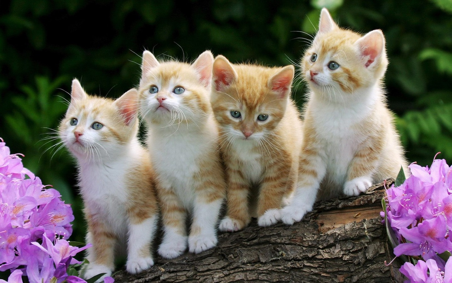 Cute Cats wallpaper
