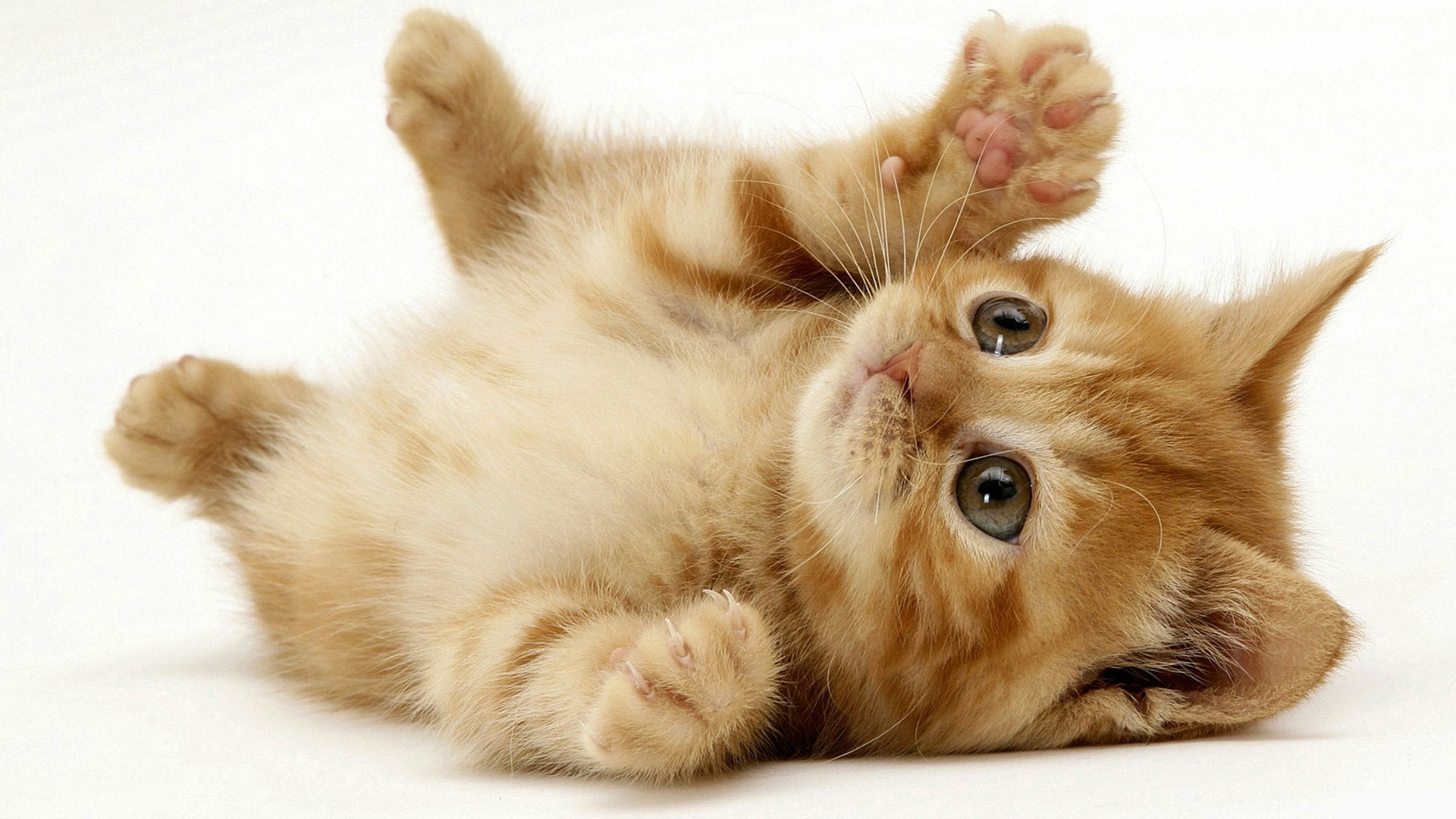 Cute Cats wallpaper 1920x1080 35141