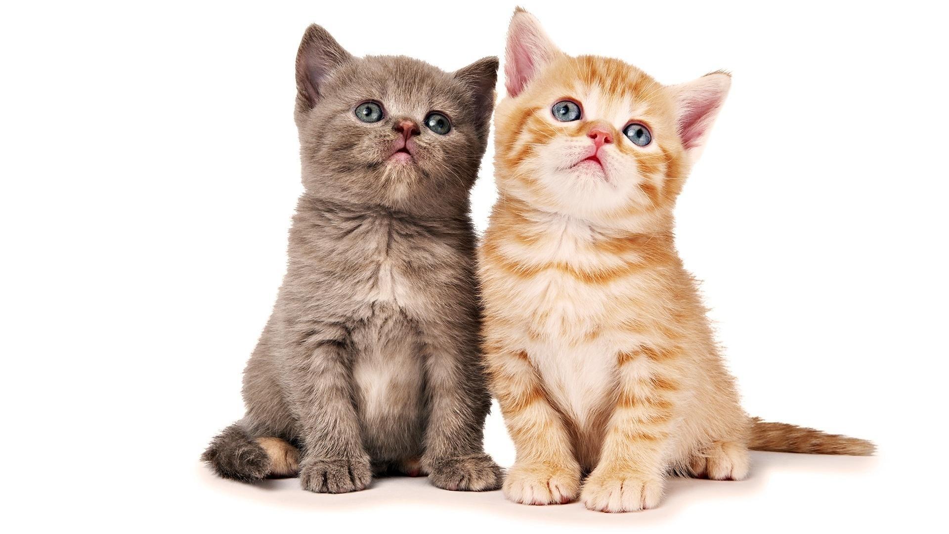 Cute Cats #4