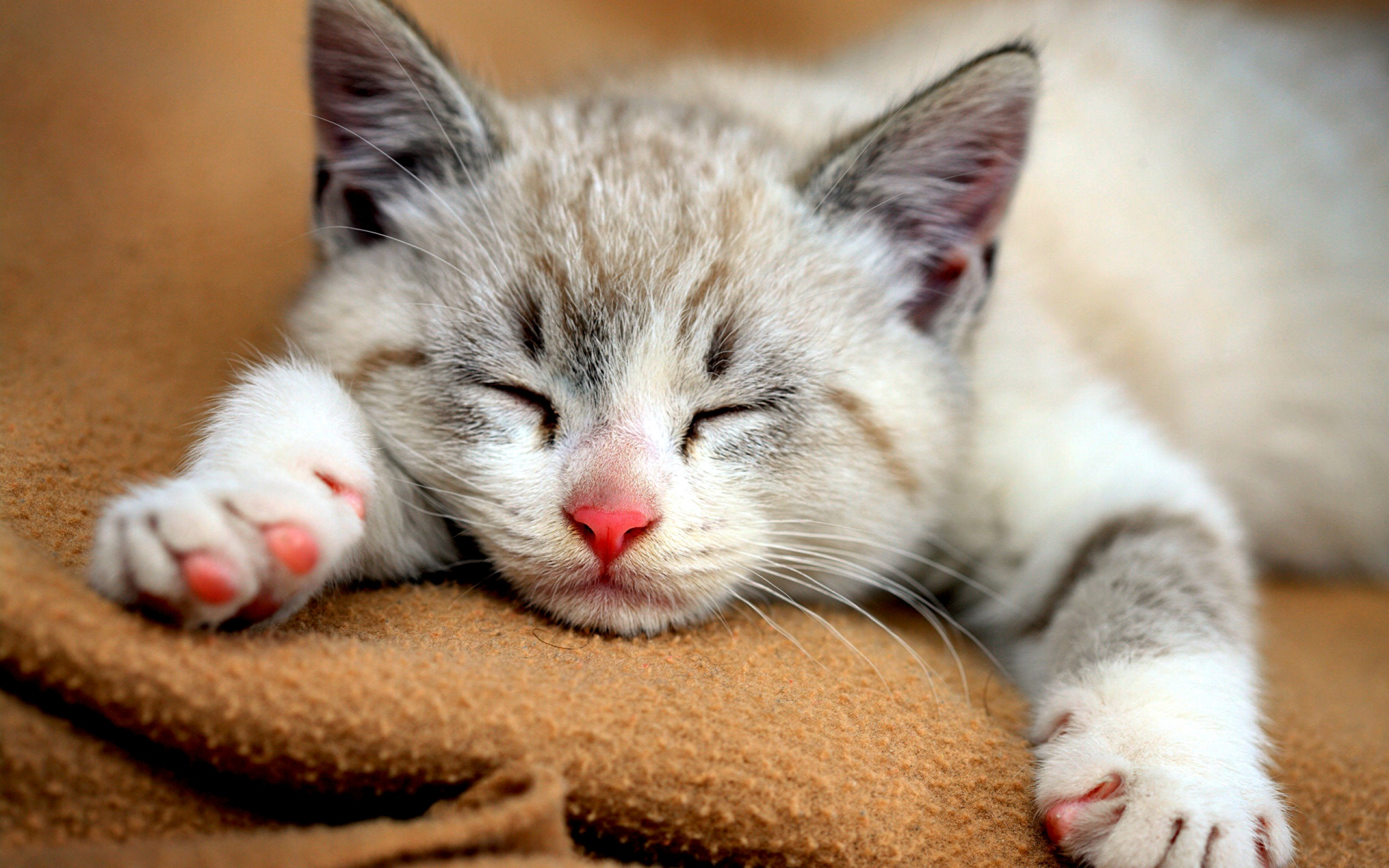 Cute Cats HD