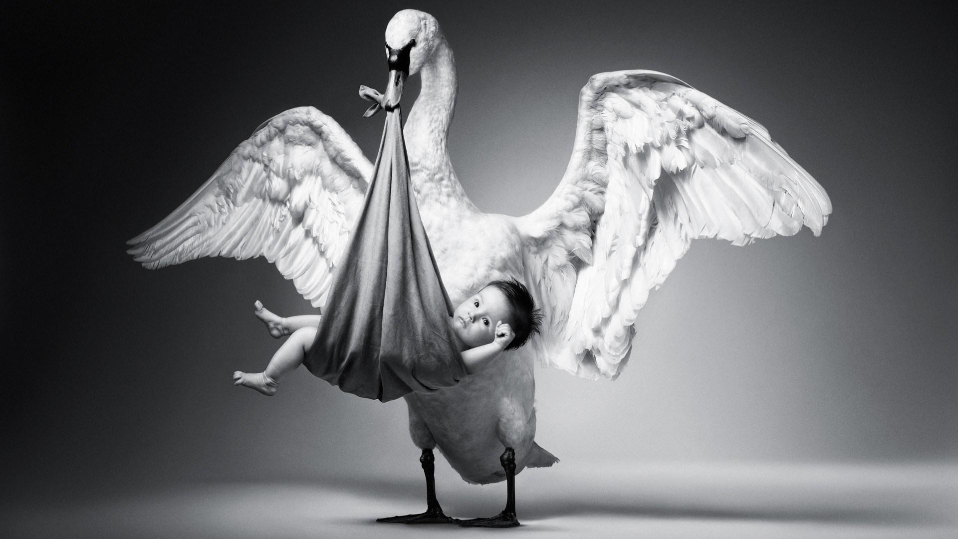 Cute Child White Swan Photo Funny