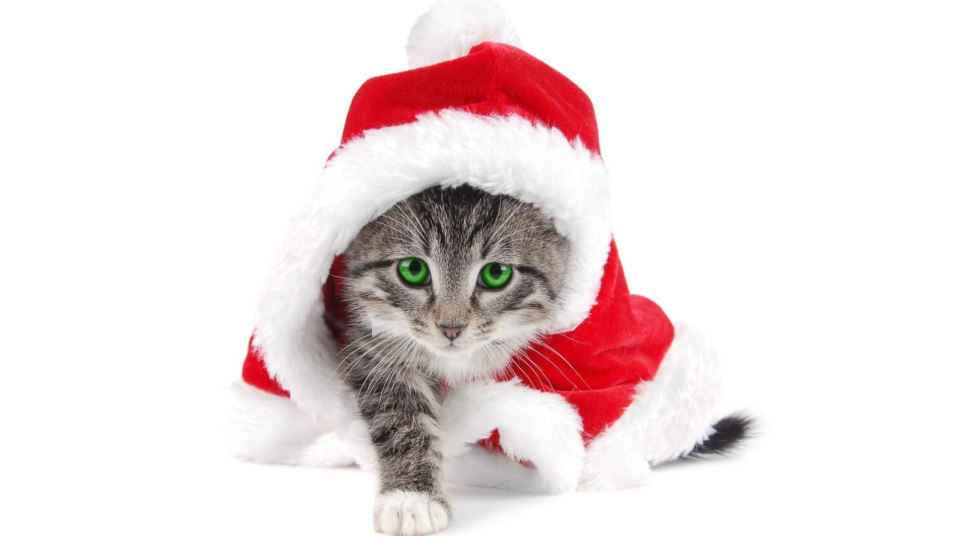 Cute Christmas 760 1920x1080 px