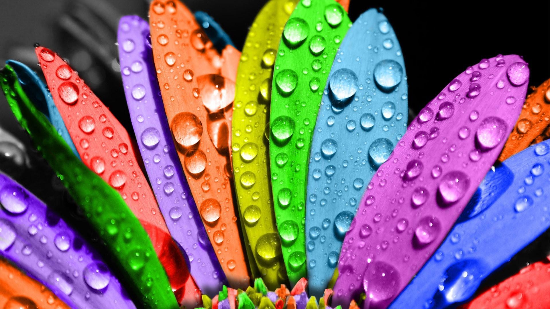 Cute Colorful Wallpaper 15113