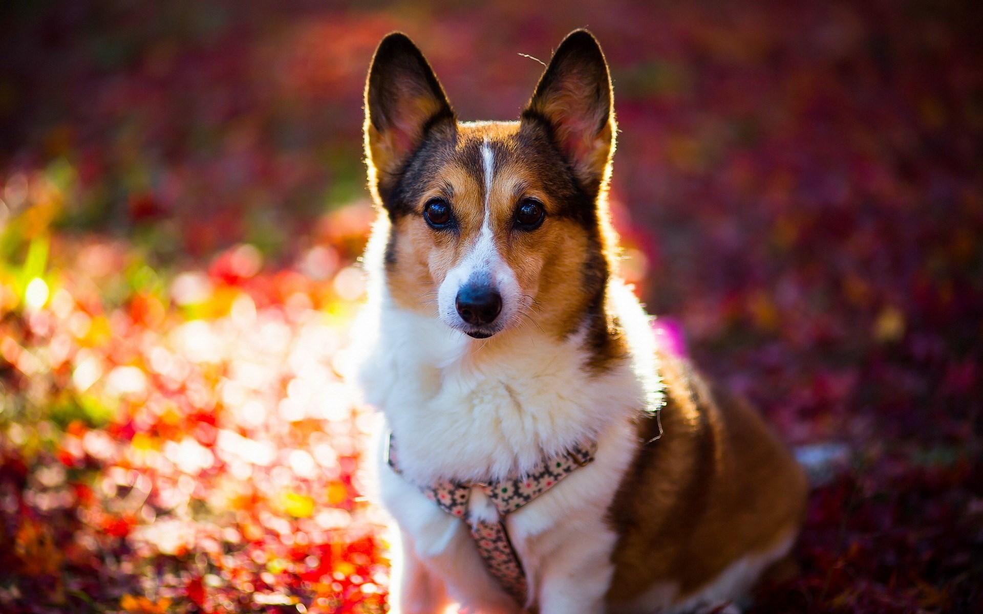 Cute Dog Close-Up