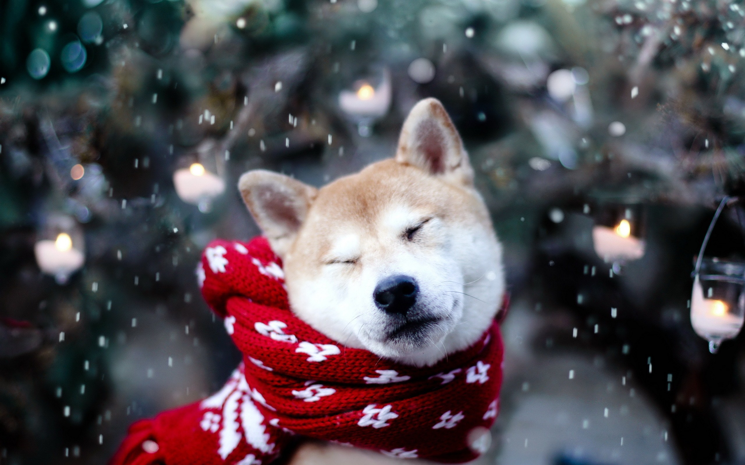 Cute Dog Winter Snow Snowflakes Nature Photo