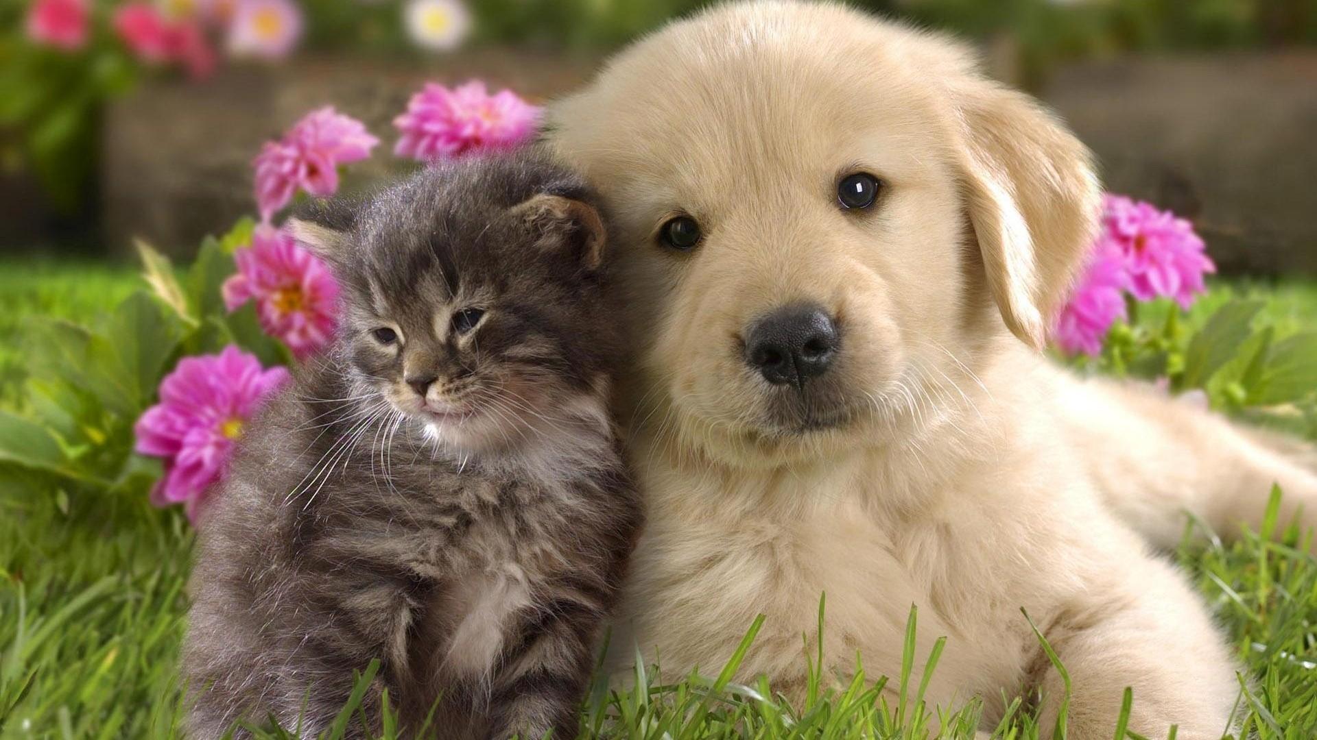 Cute Dogs #7
