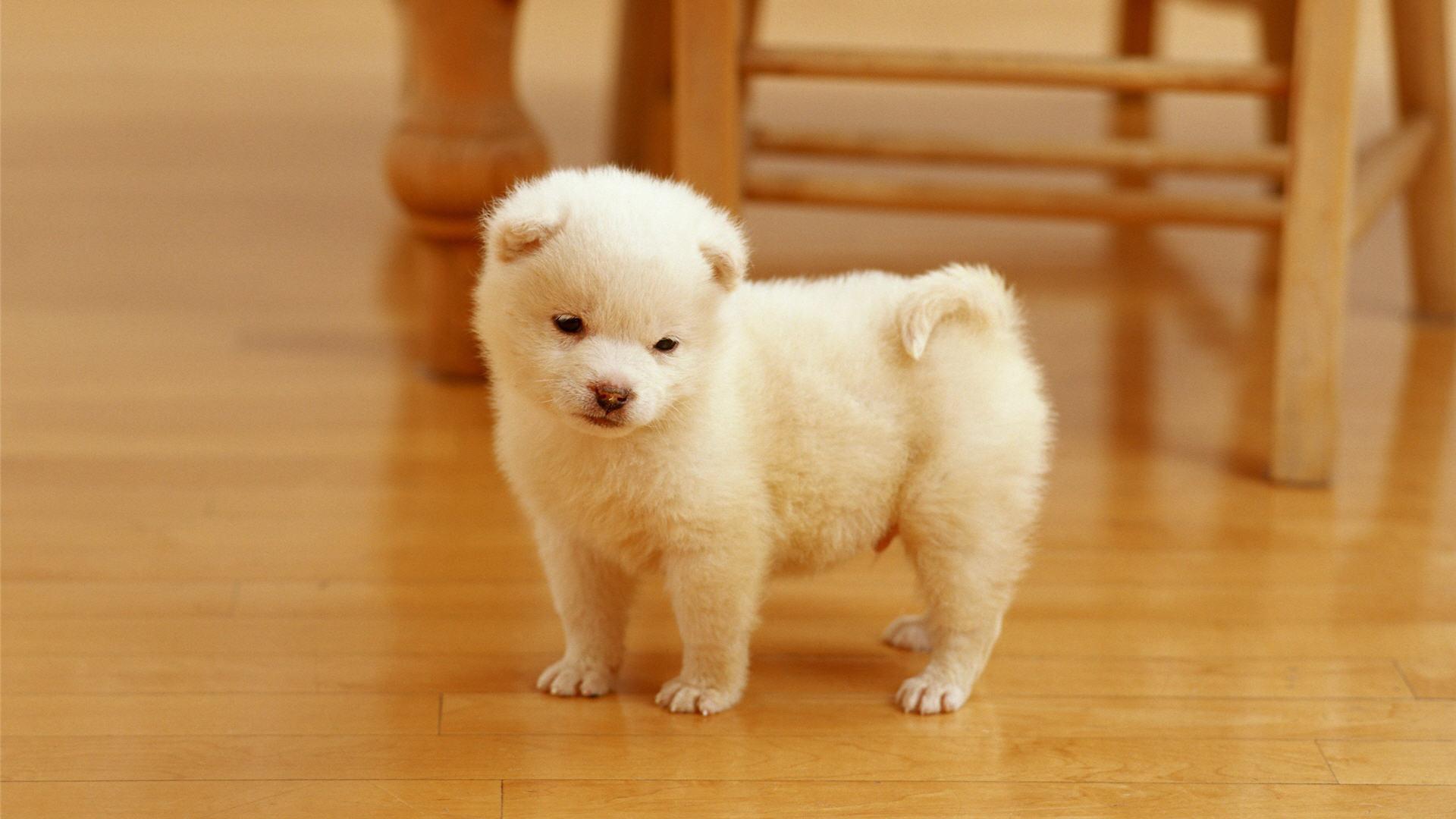 Cute Dogs #8