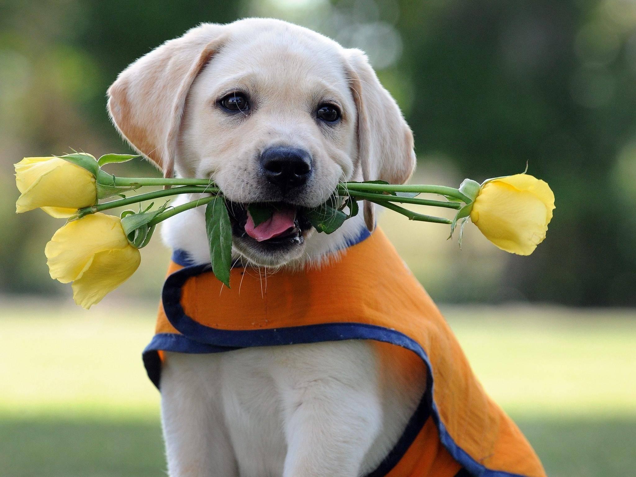 Desktop images of little cute dogs wallpaper