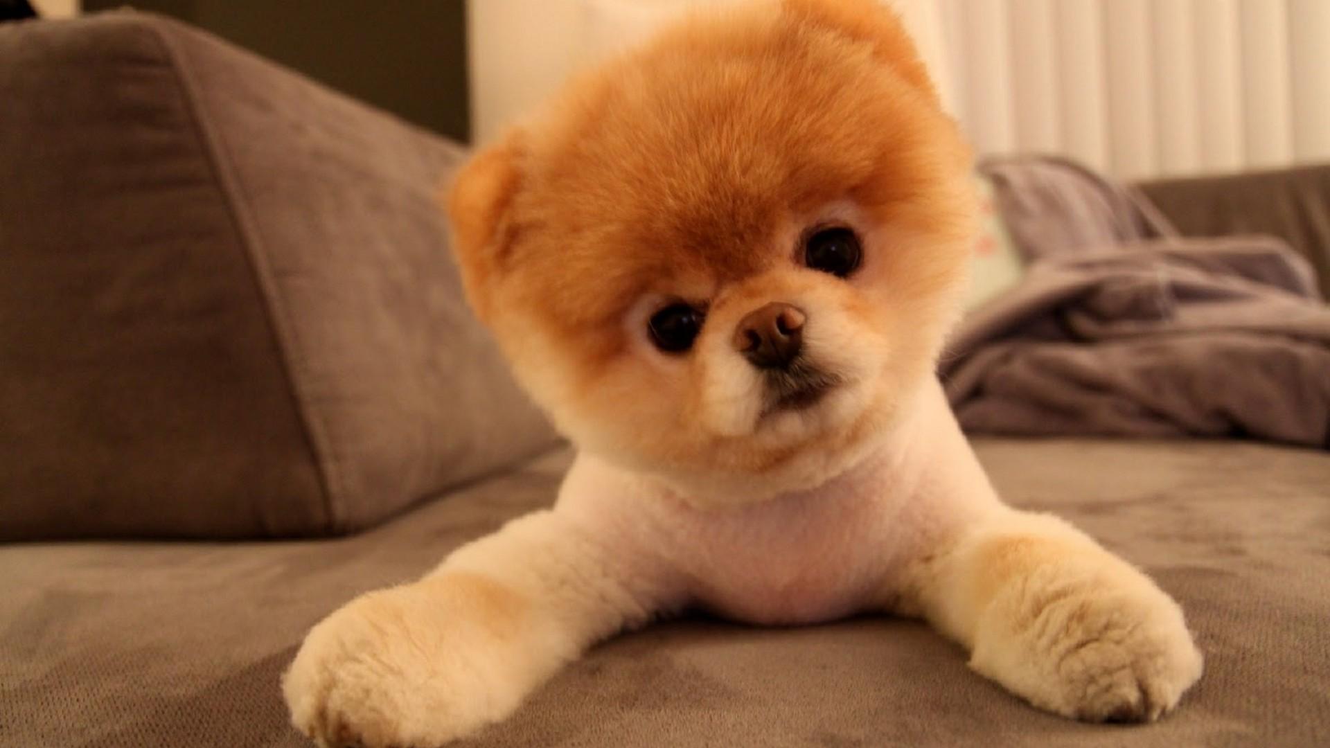 Cute Dogs #9