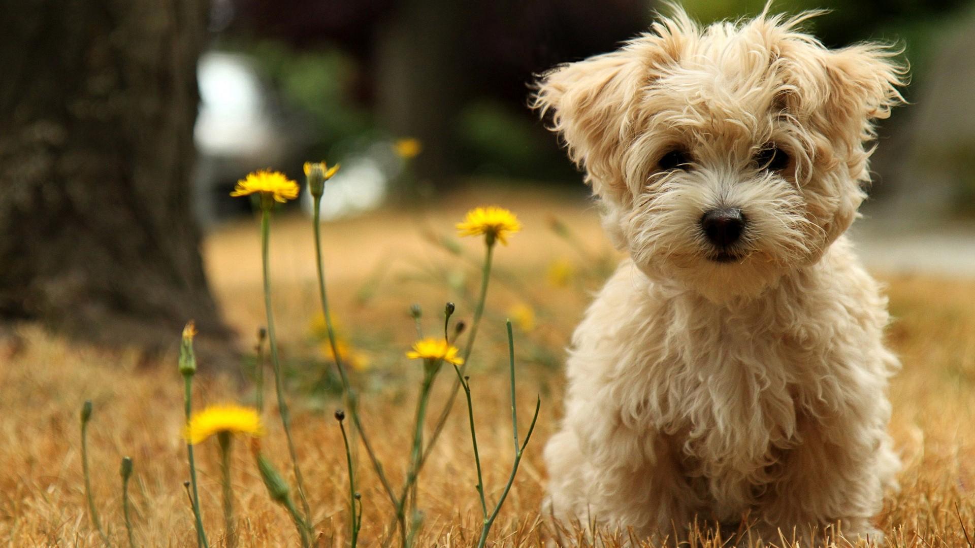 Cute Dogs #6