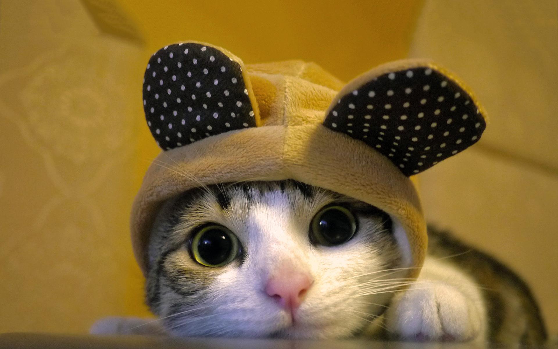 Cute dressed cat