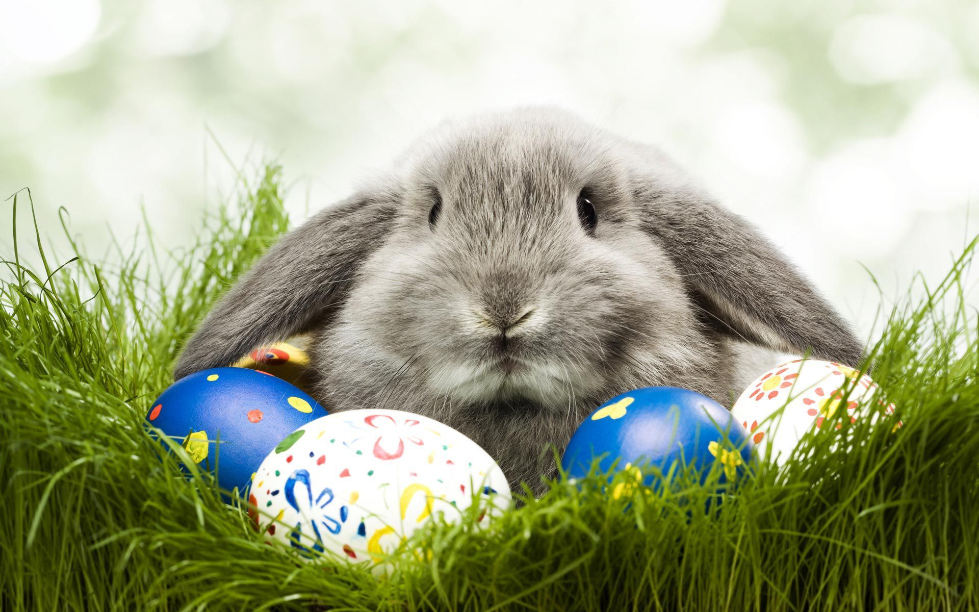 Cute Easter Pictures