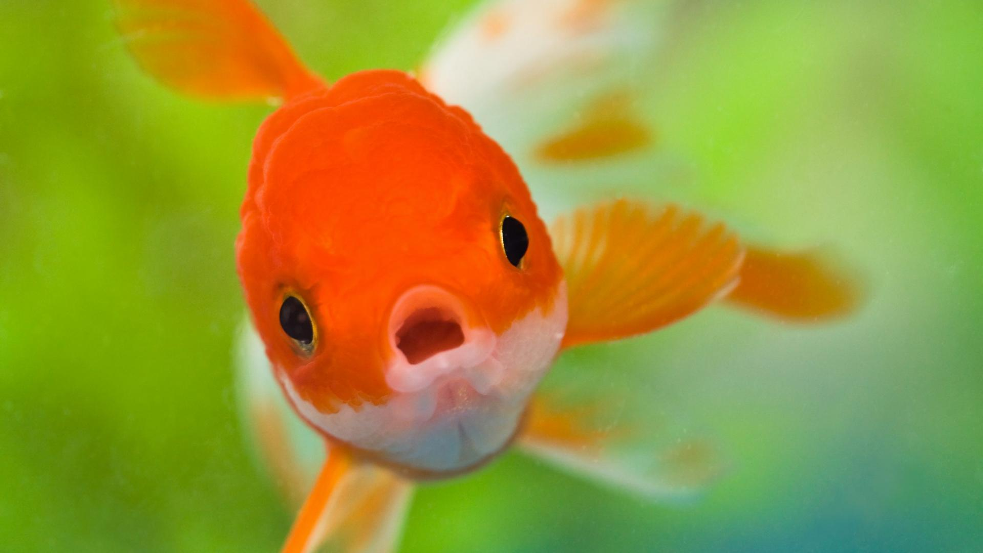 Cute Fish Pictures
