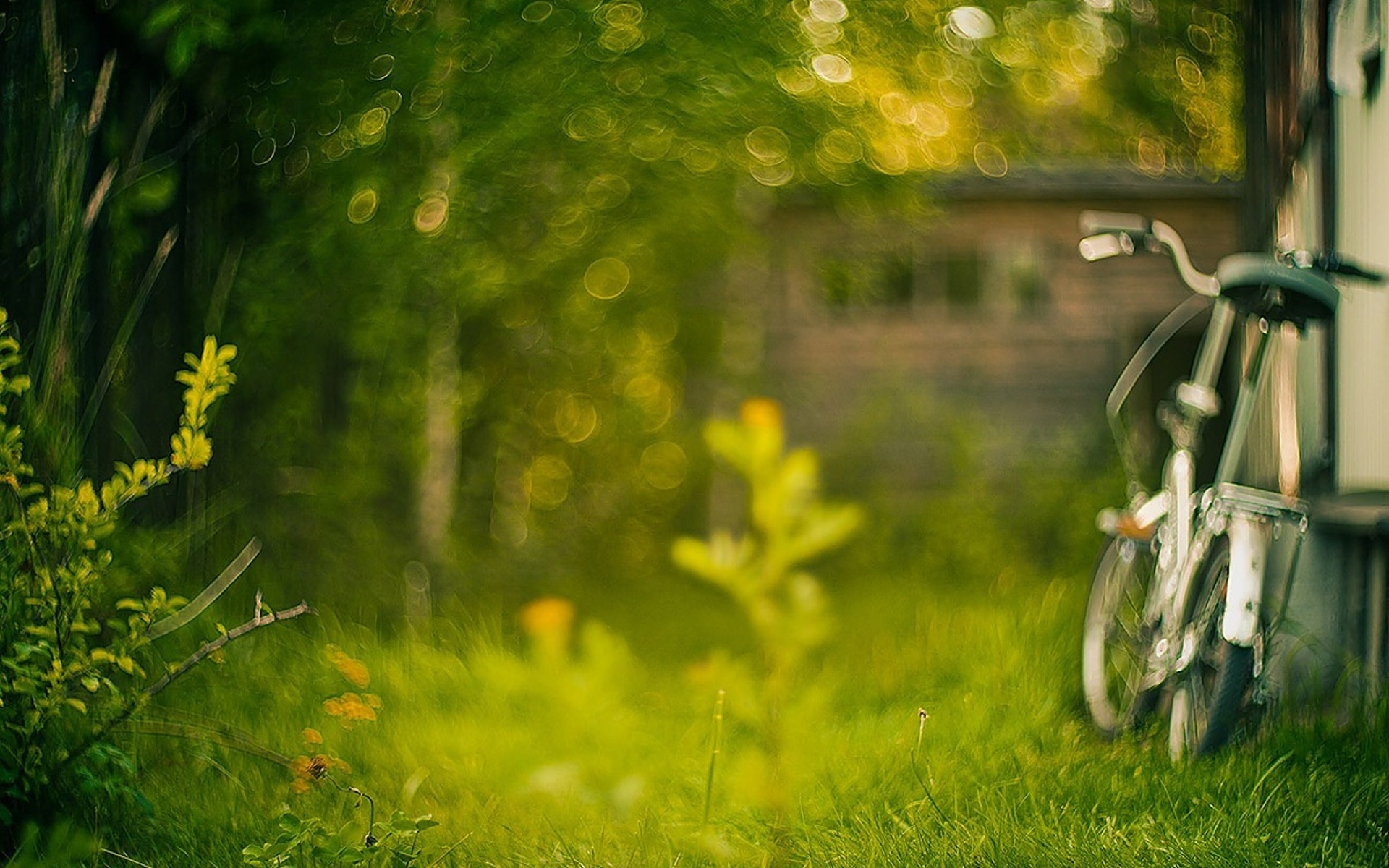 Cute Grass Bokeh Wallpaper