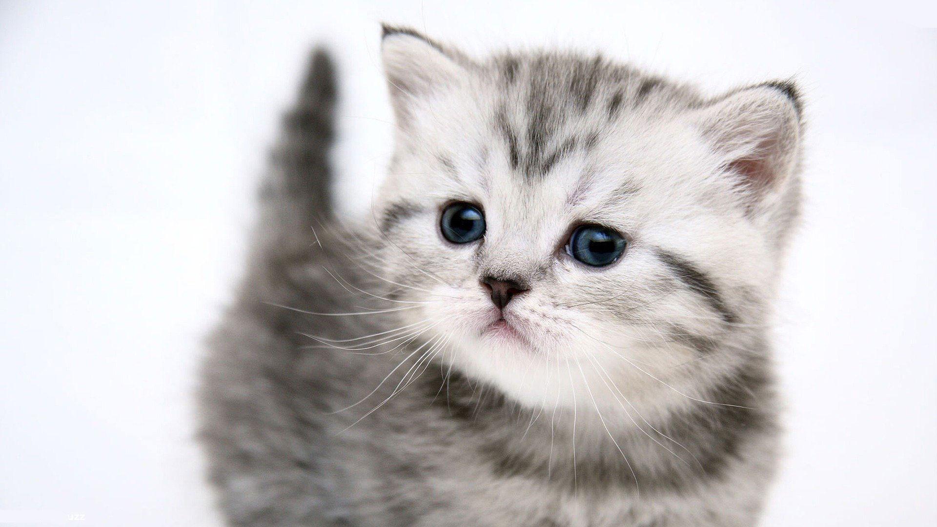 Cute Gray Cat - 1920x1080.