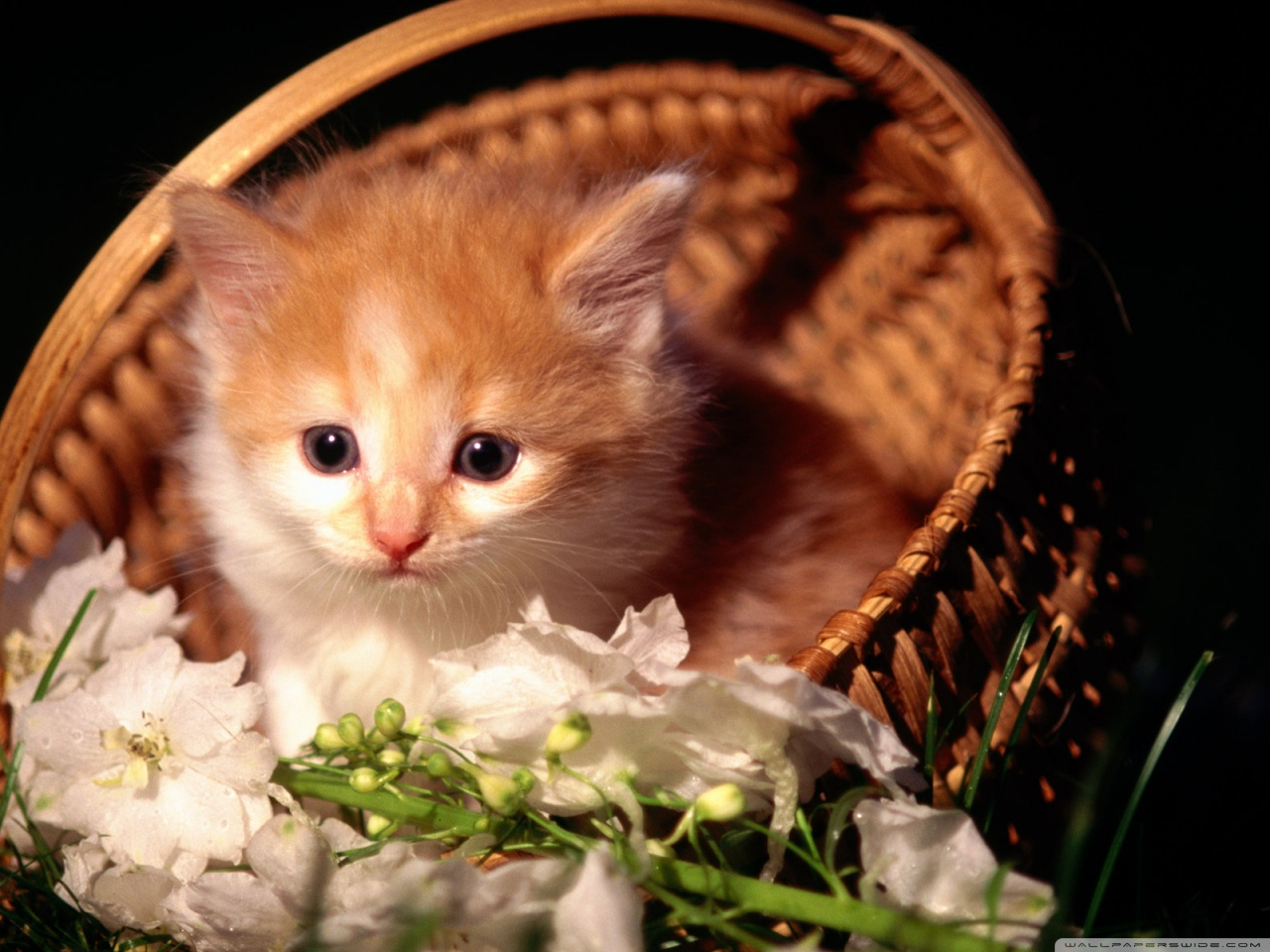 Cute Kitten Basket  Photo