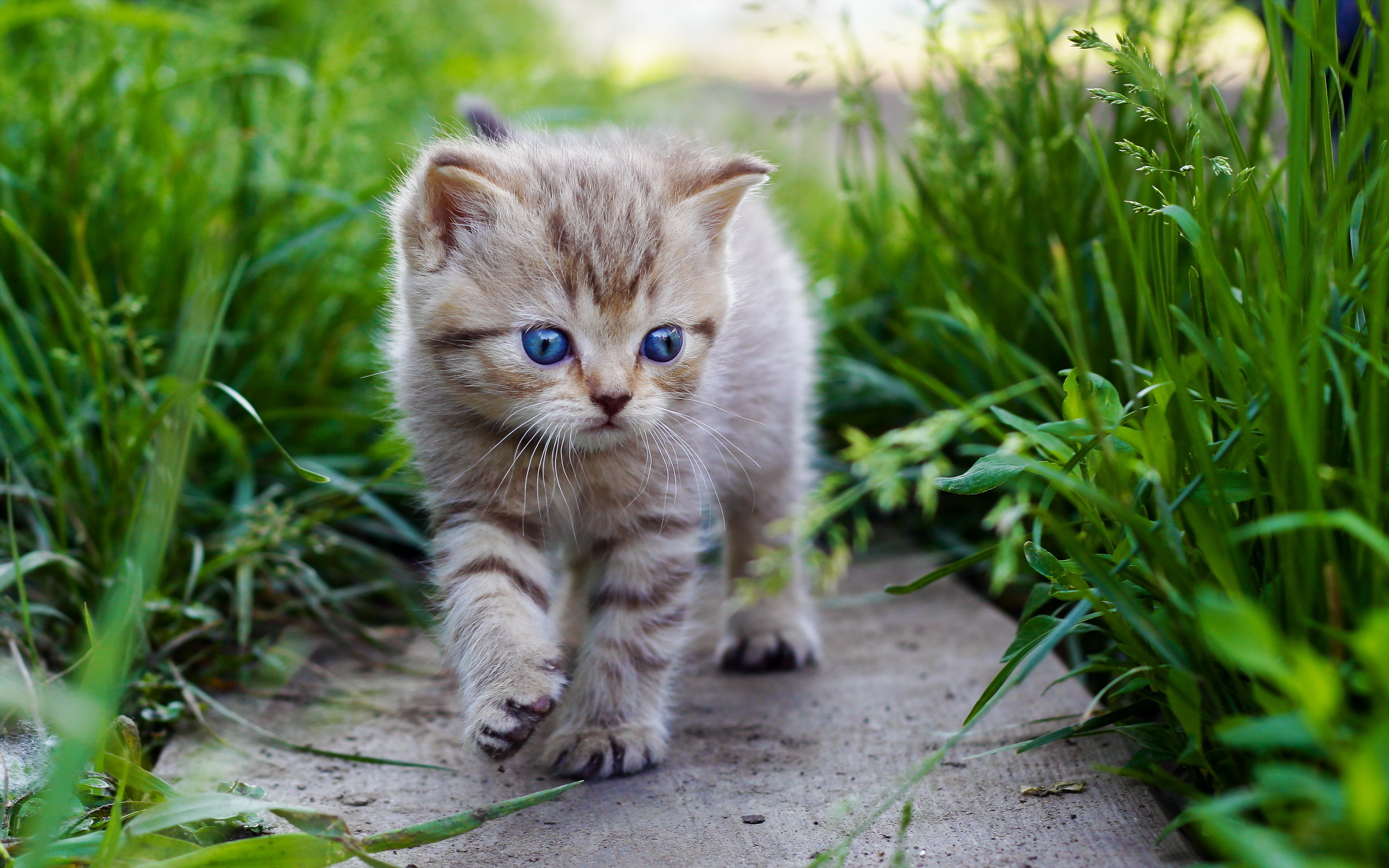 Cute Kitten Grass Background