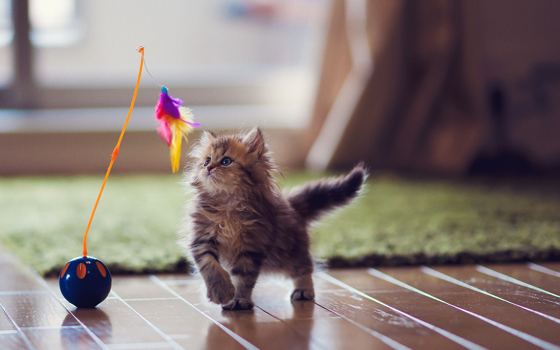 Cute Kitten Play Toy Photo
