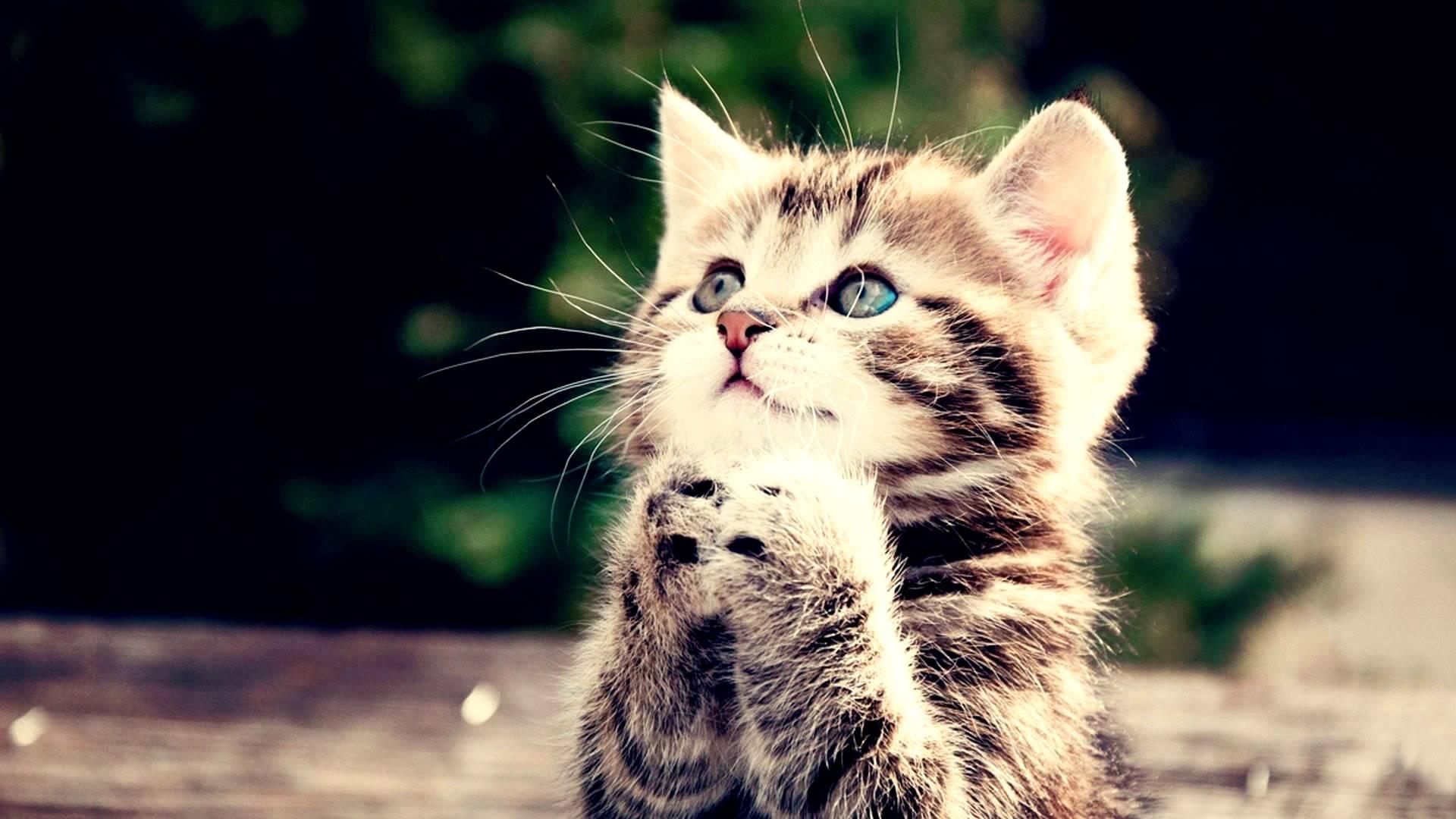 Cute kittens #10