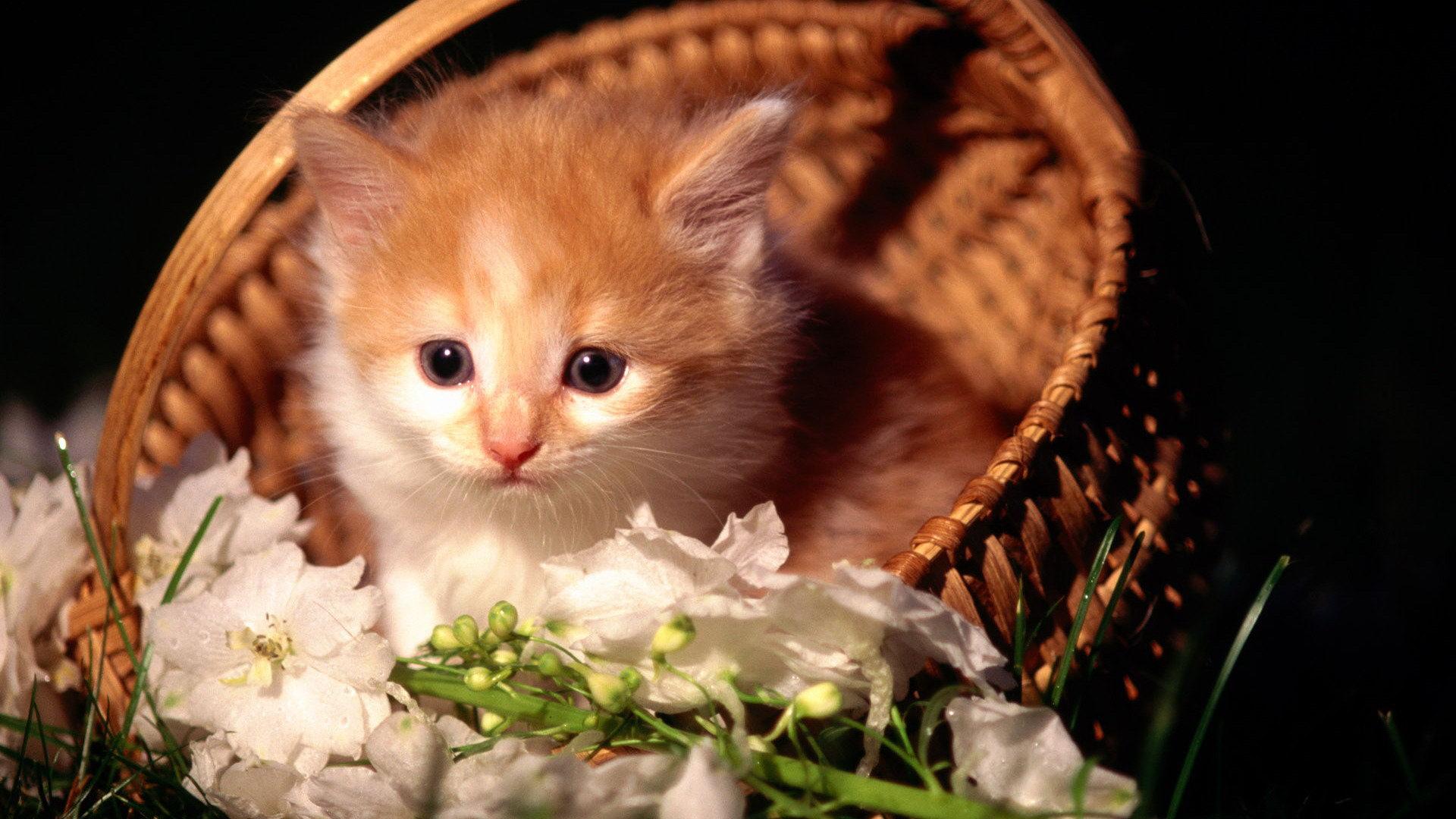 Cute kittens #11