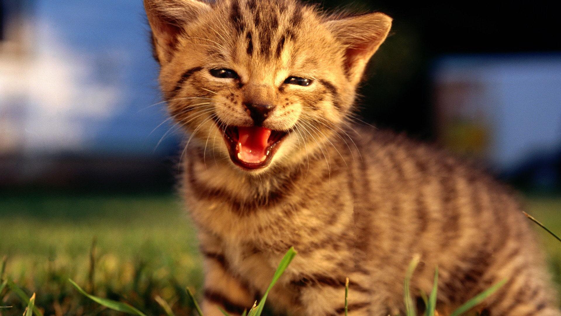 Cute kittens #12