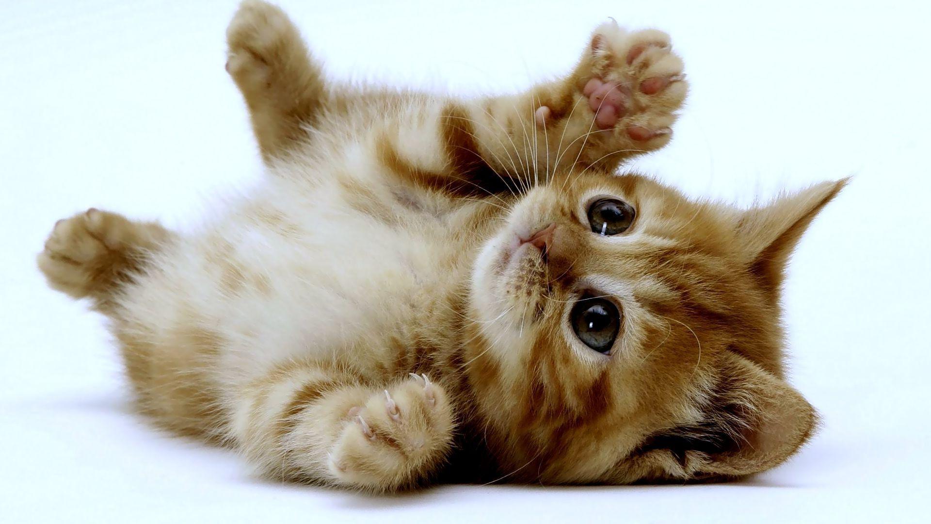 Cute Kittens 1 Wallpaper HD