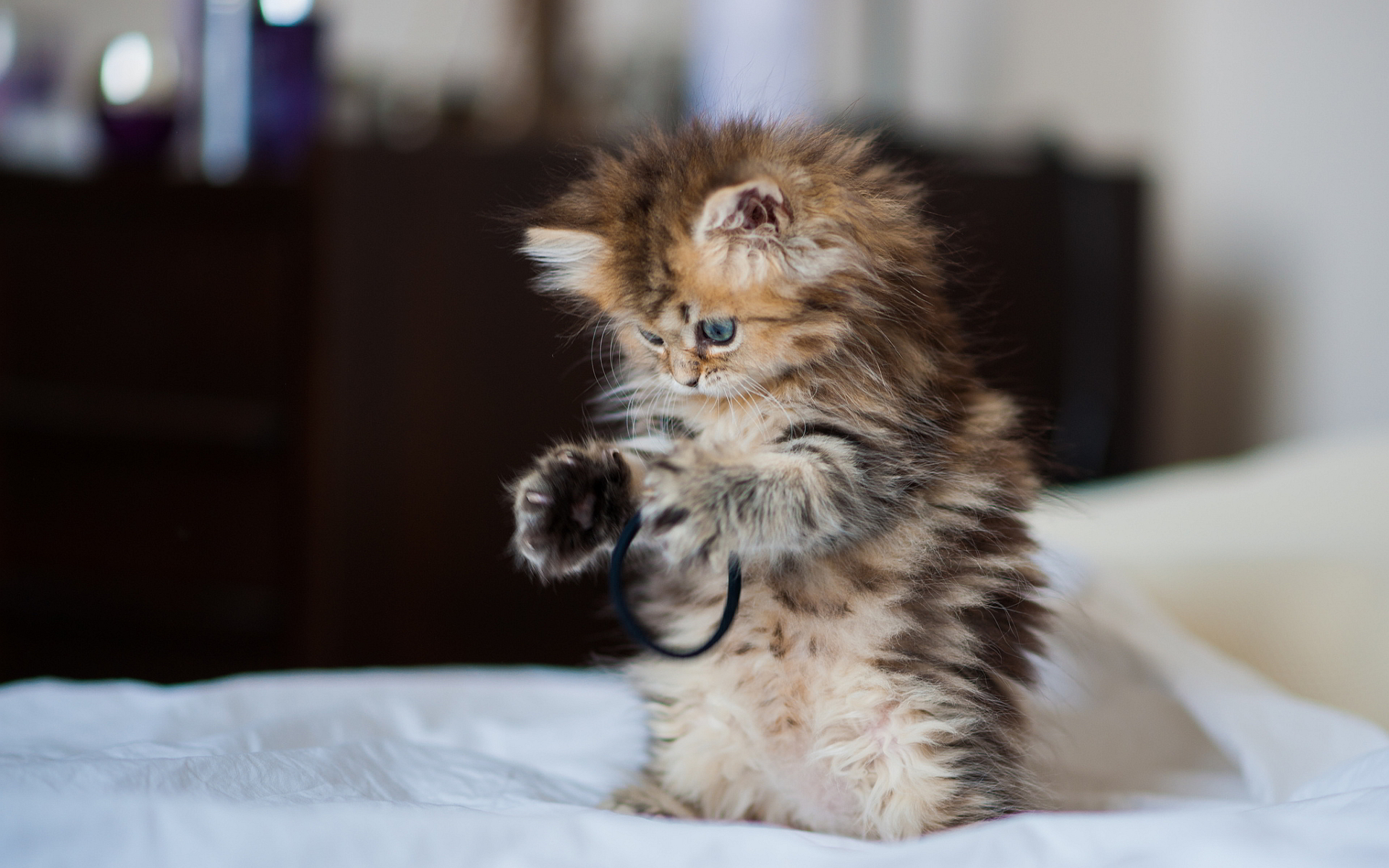 Cute kitty playing