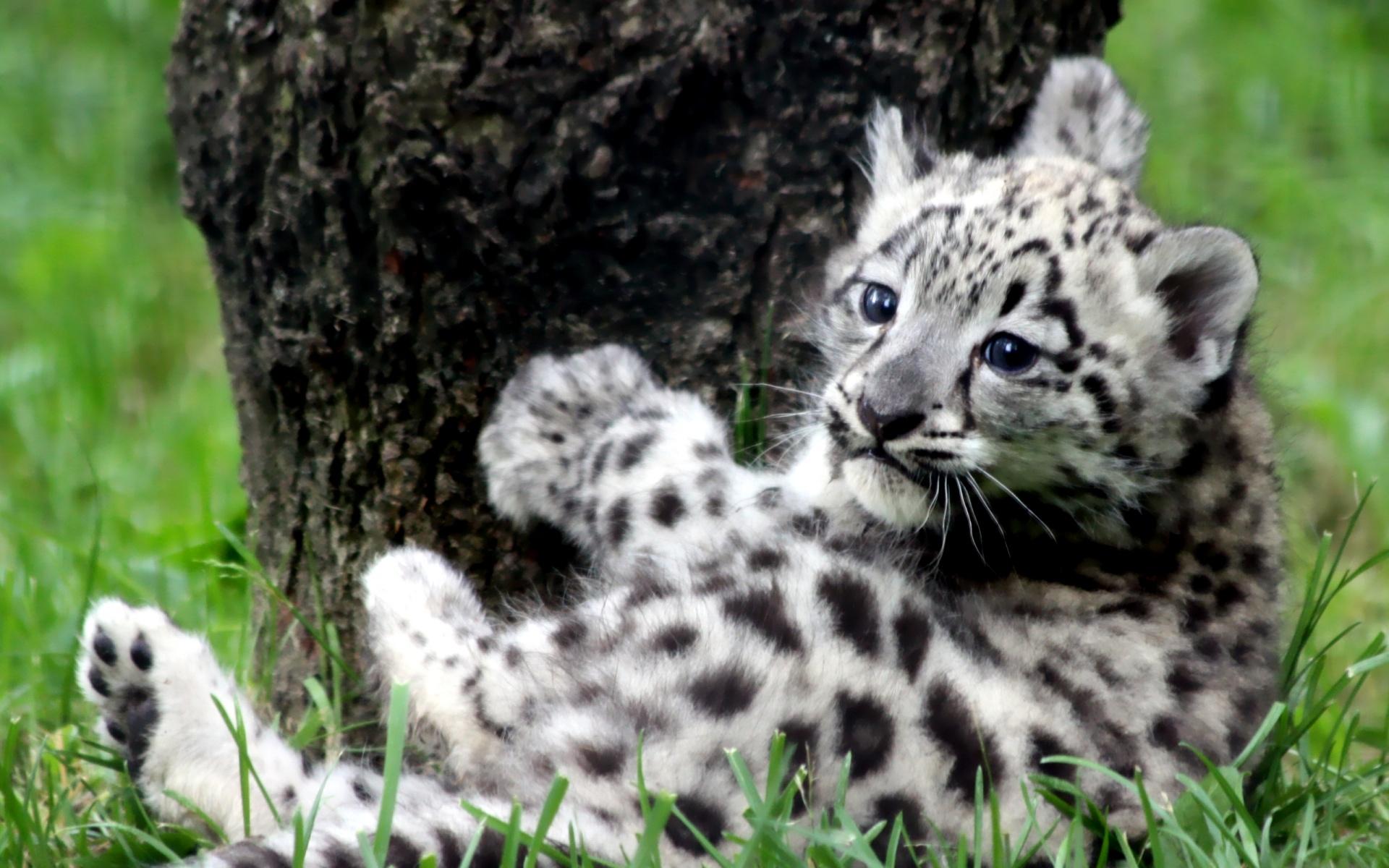 Cute Leopard Background