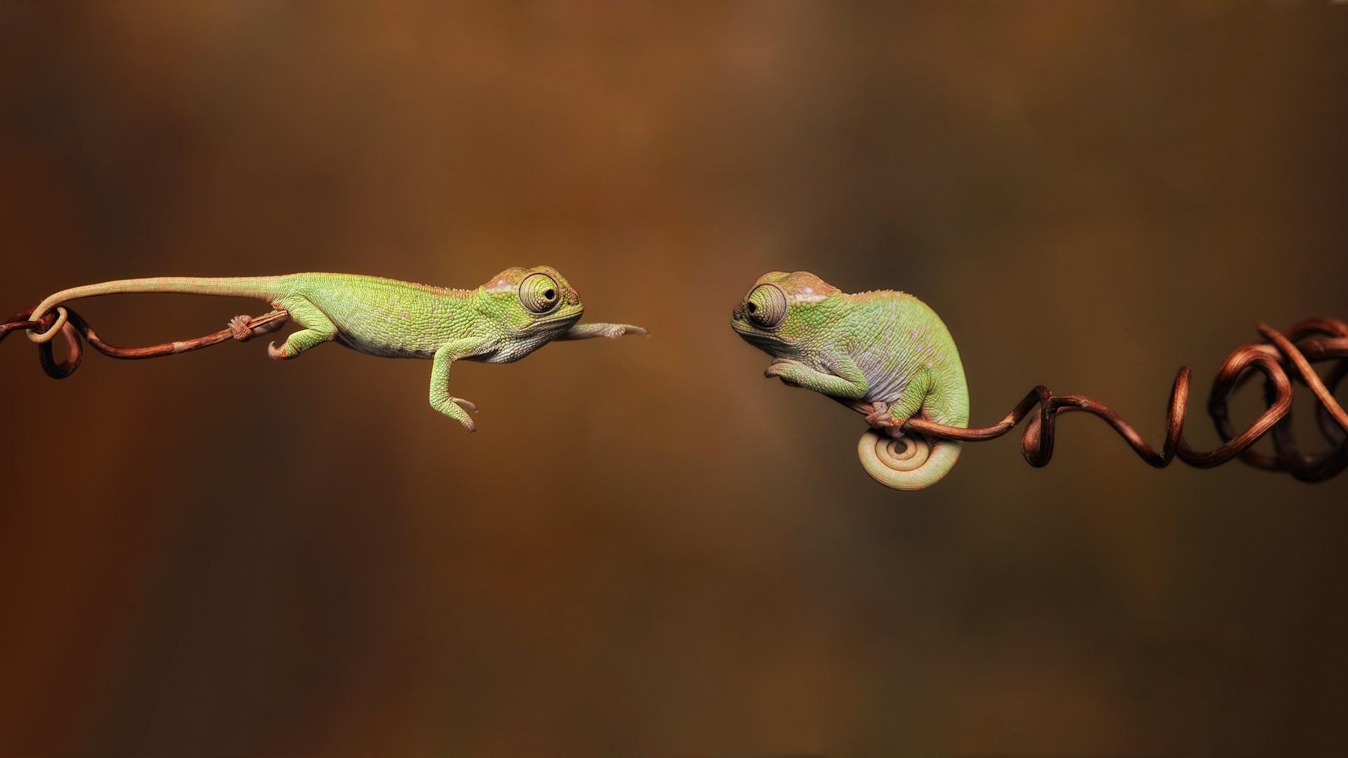 Green Lizard Wallpaper 21417 1920x1080 px