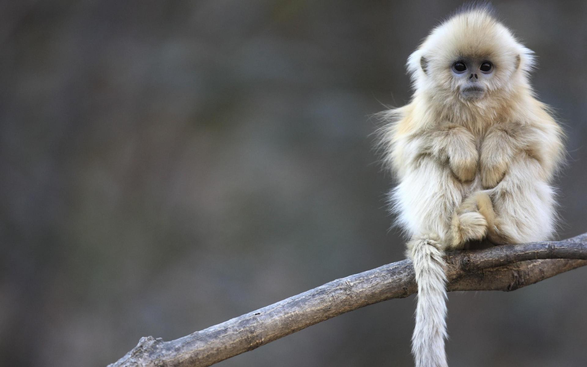 Monkey setting on tree