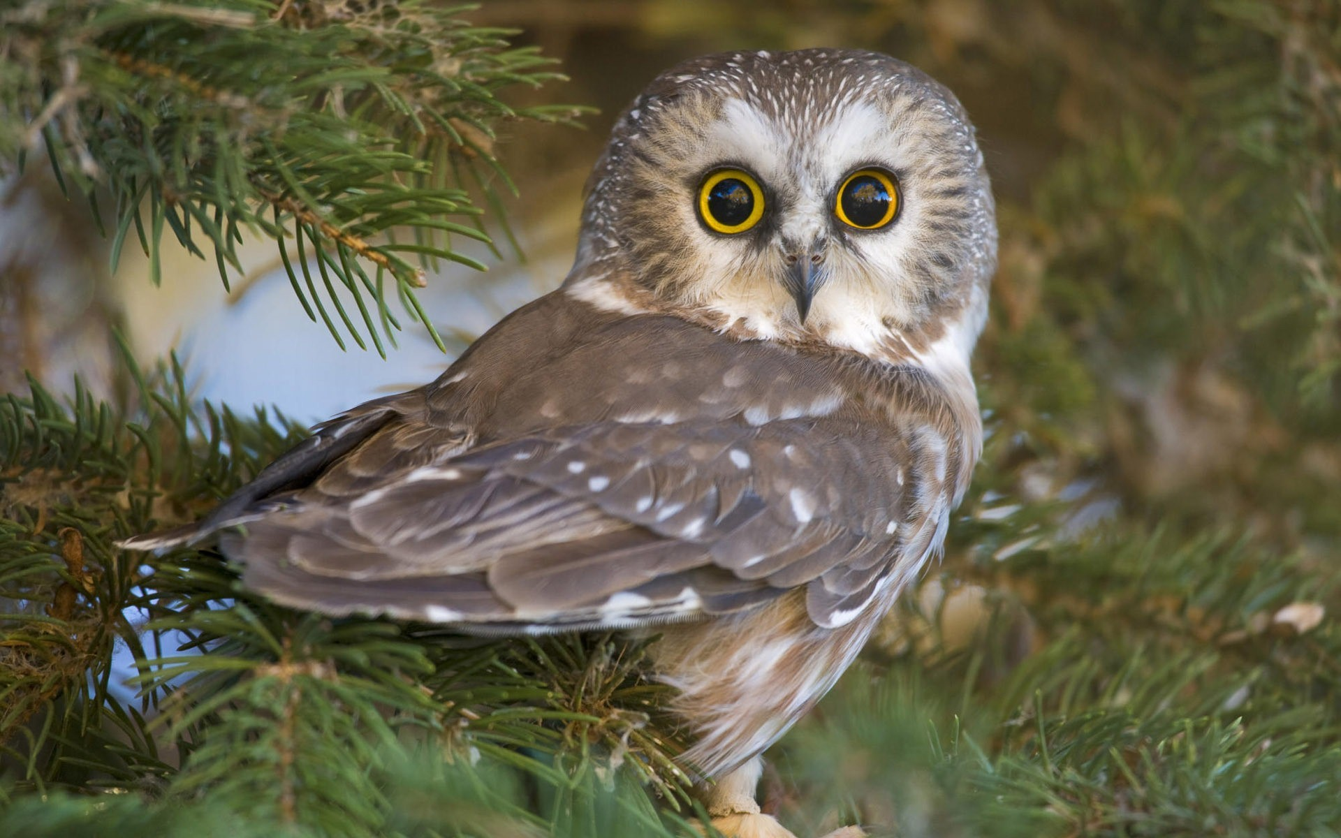 Cute owl bird
