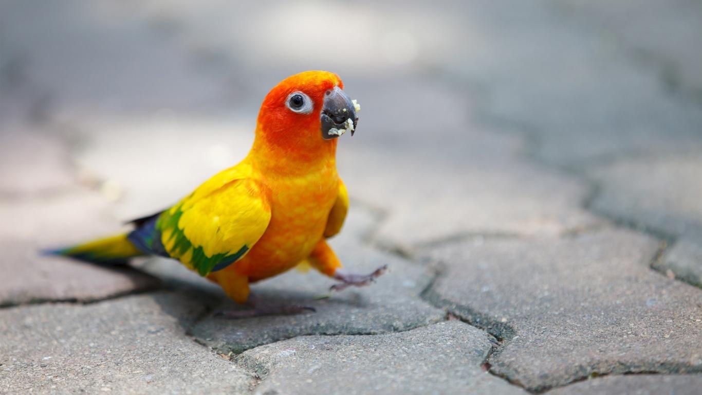 Cute Parrot Wallpaper
