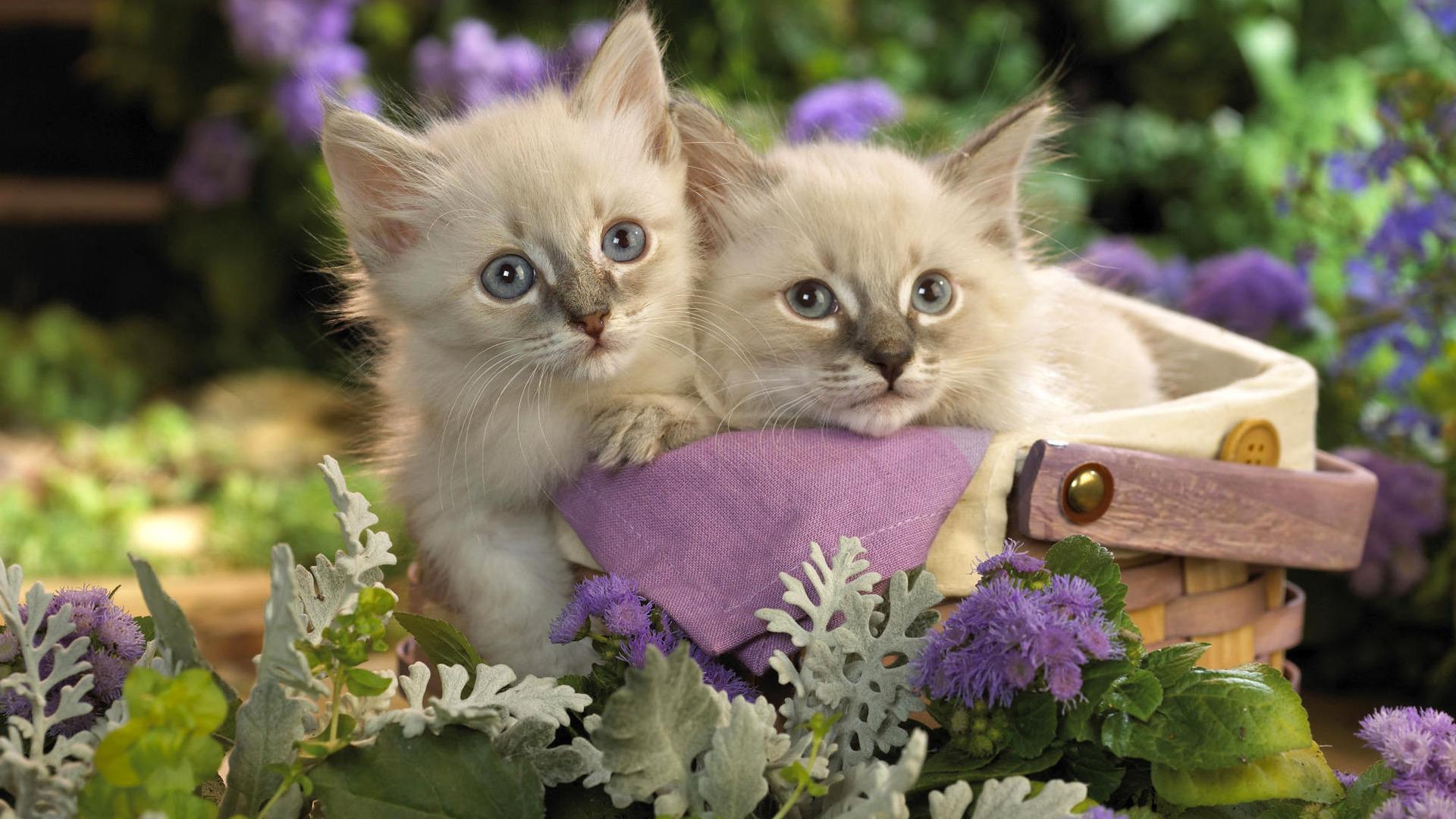 Cute Pets Wallpaper 20731 1920x1200 px