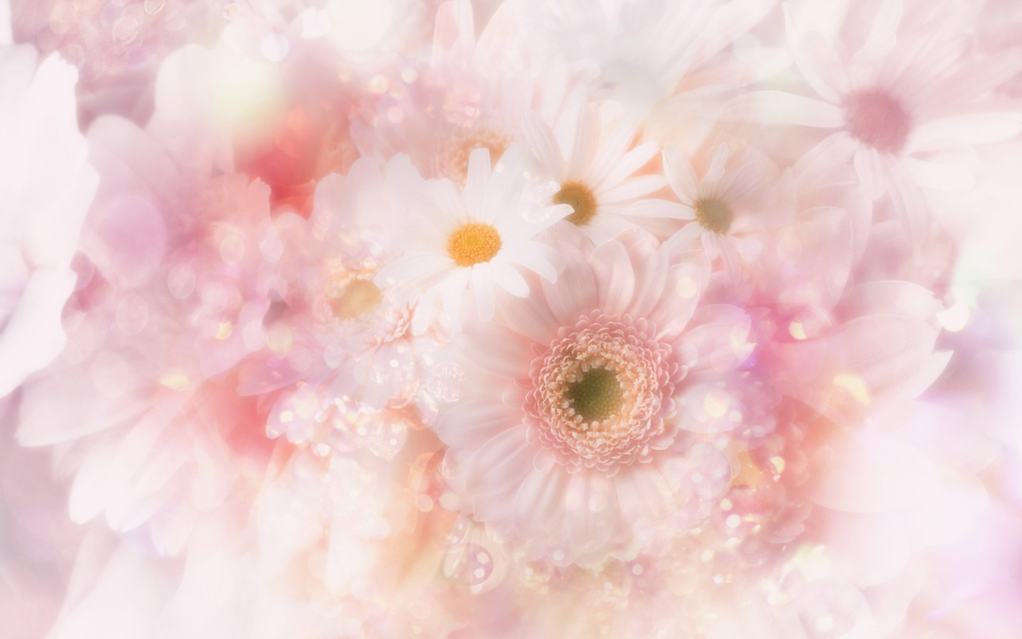 Cute Pink Flowers Wallpaper