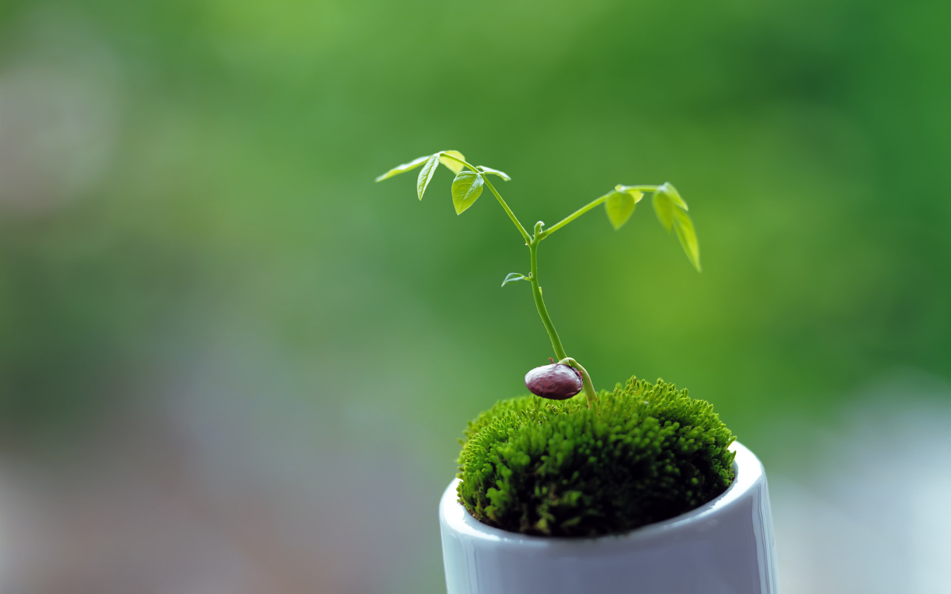 Cute Plant Wallpaper