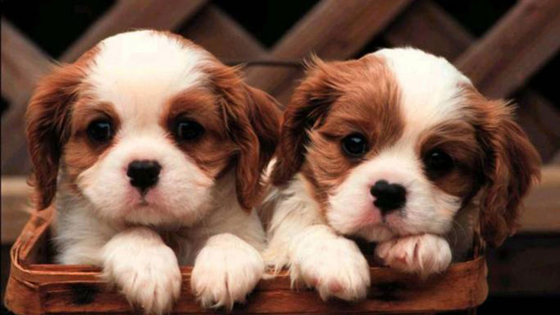 Cute Puppies #13