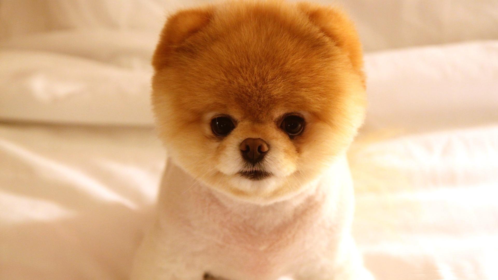 Cute Puppies #17